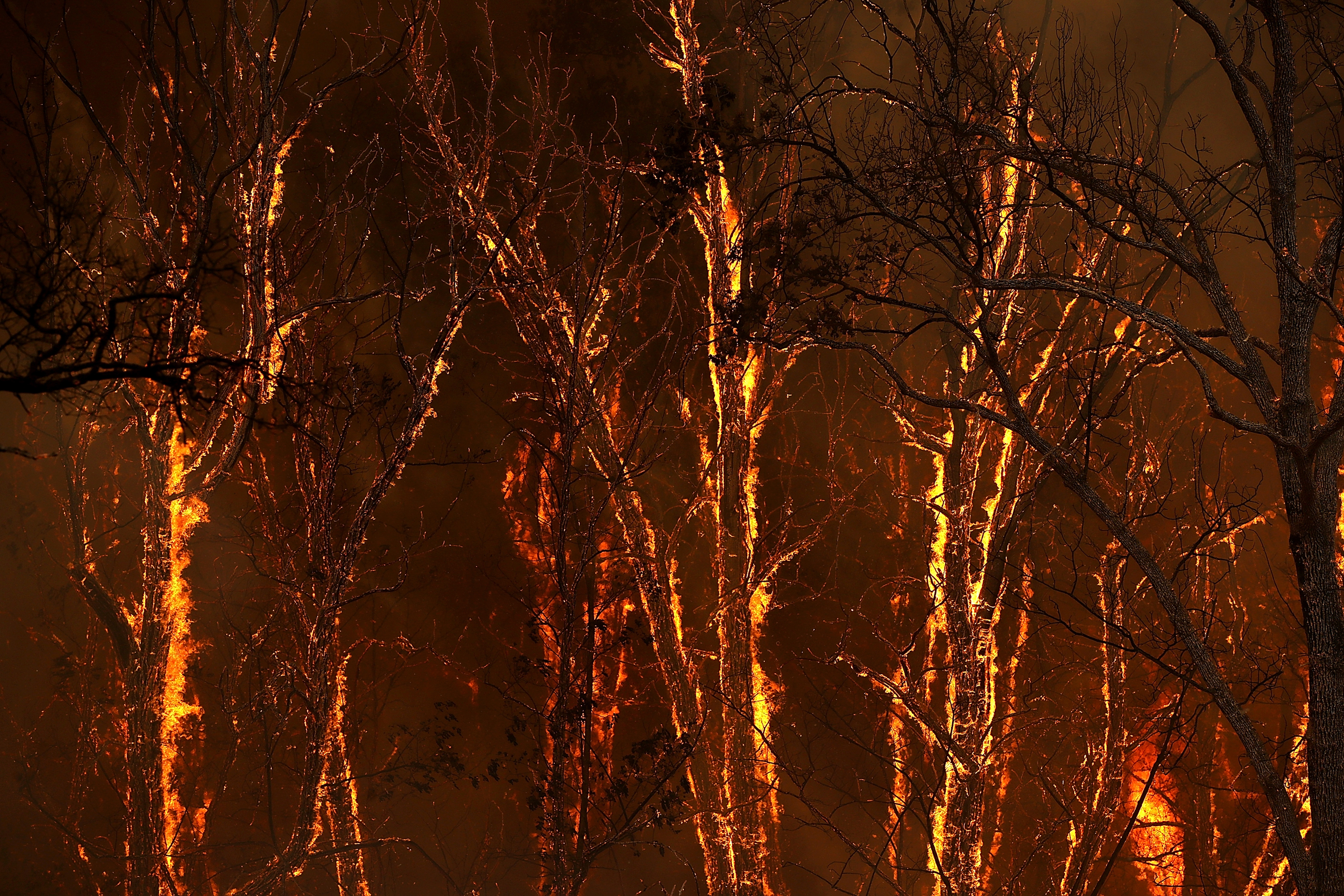 Flames from the Carr Fire burns through trees along highway 299 near Whiskeytown, Calif. on July 27.