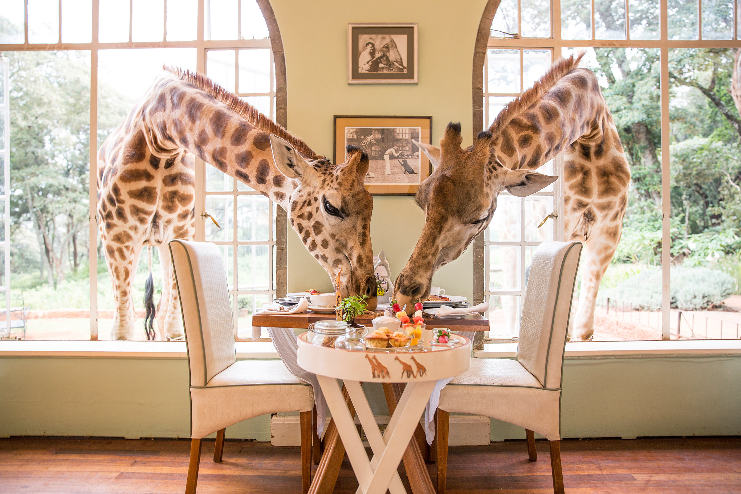 Giraffe Manor Is One of the World's Greatest Places 2018 | Time.com