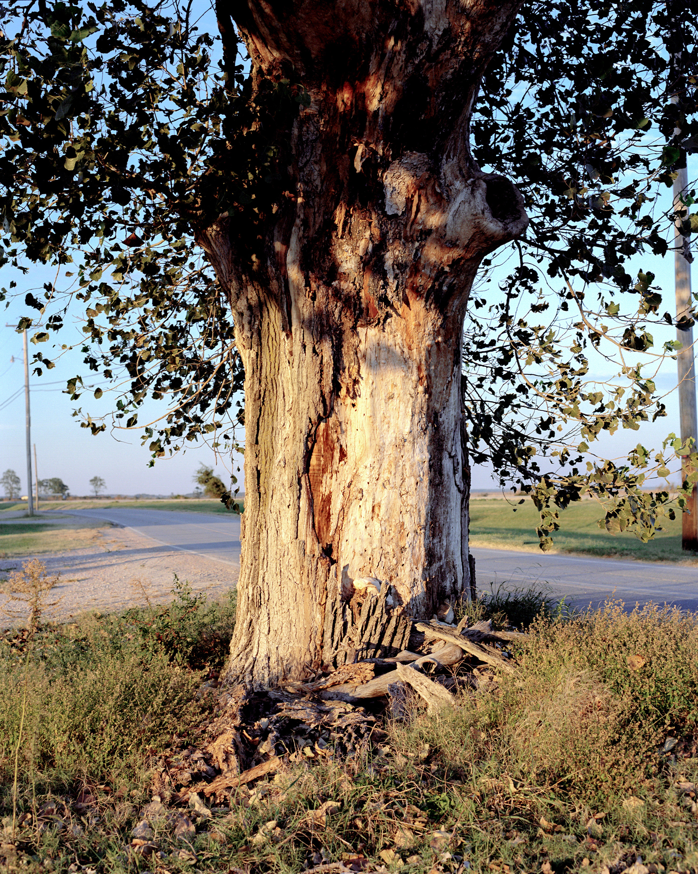 A tree in Phillips County, Ark., where a hanging may have occurred during the 1919 Race Massacre, one the deadliest mass lynchings in U.S history.