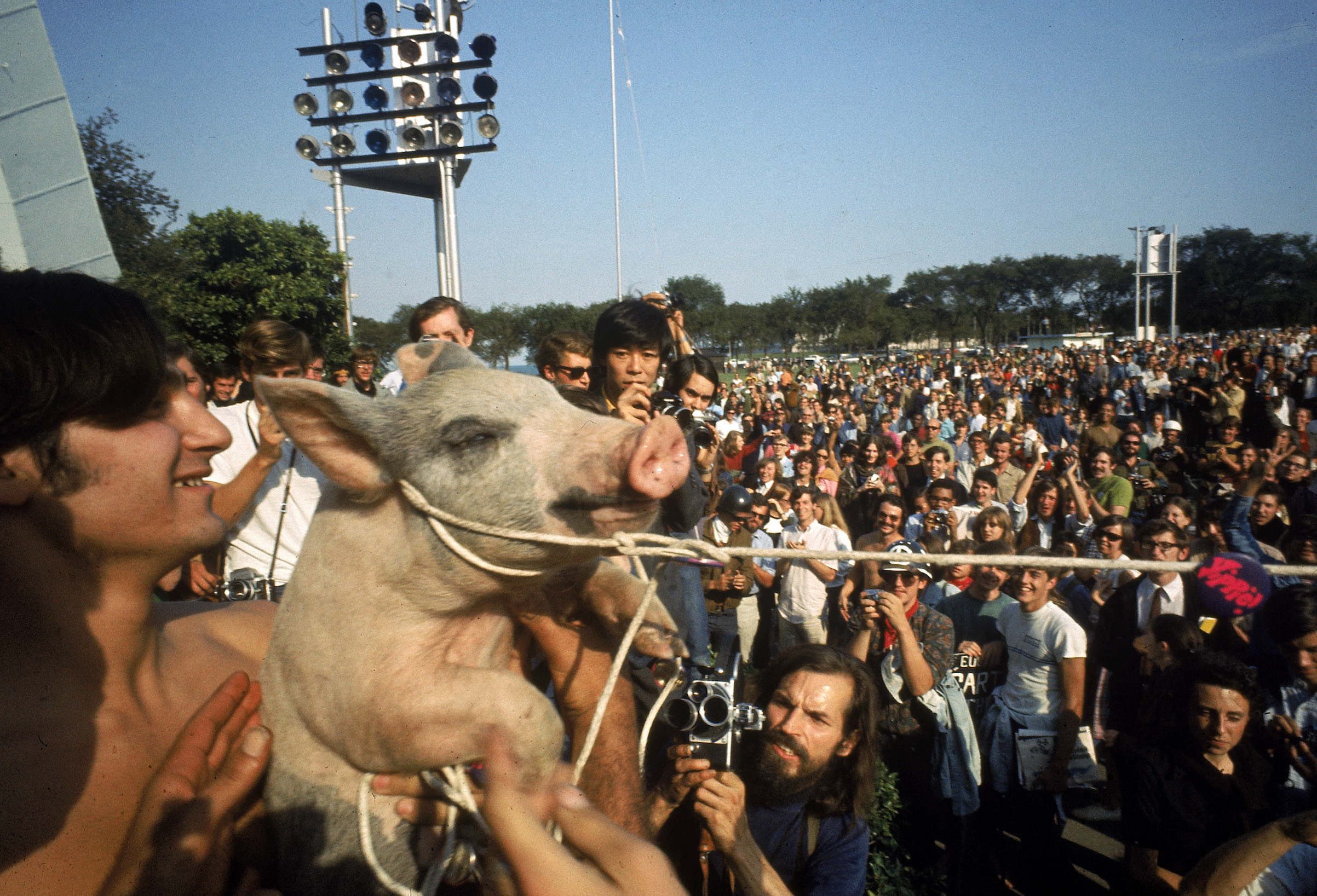 Yippies parading their Presidential candidate, Pigasus the pig, during the 1968 Democratic National Convention