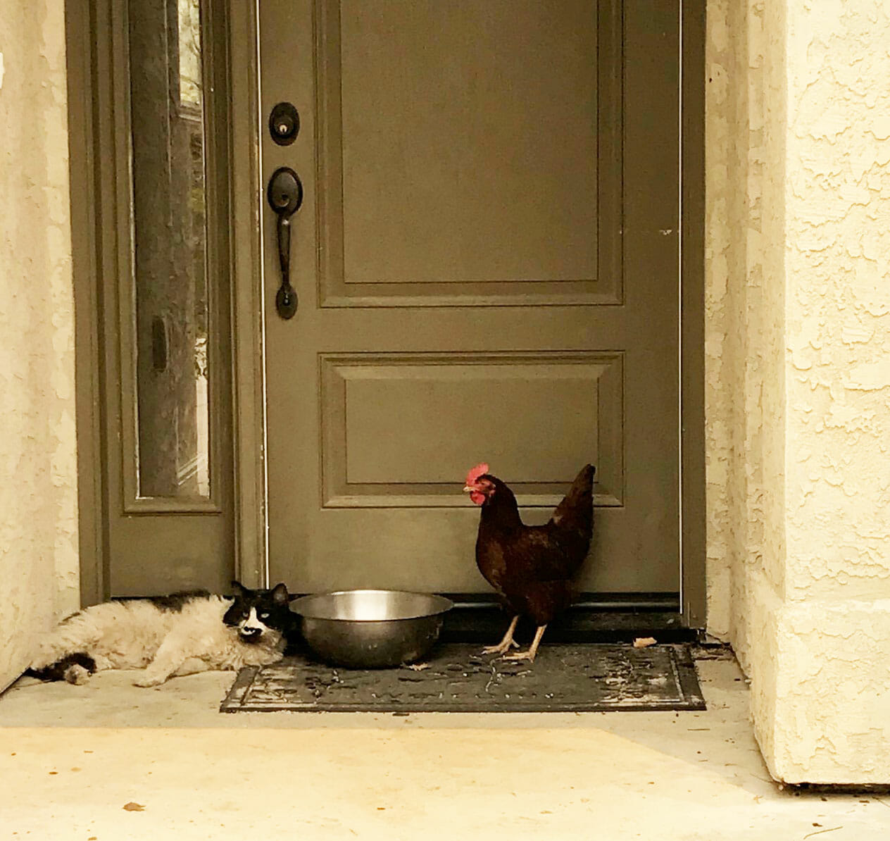 Green Valley Firefighters discovered a chicken and cat huddled together in a doorway