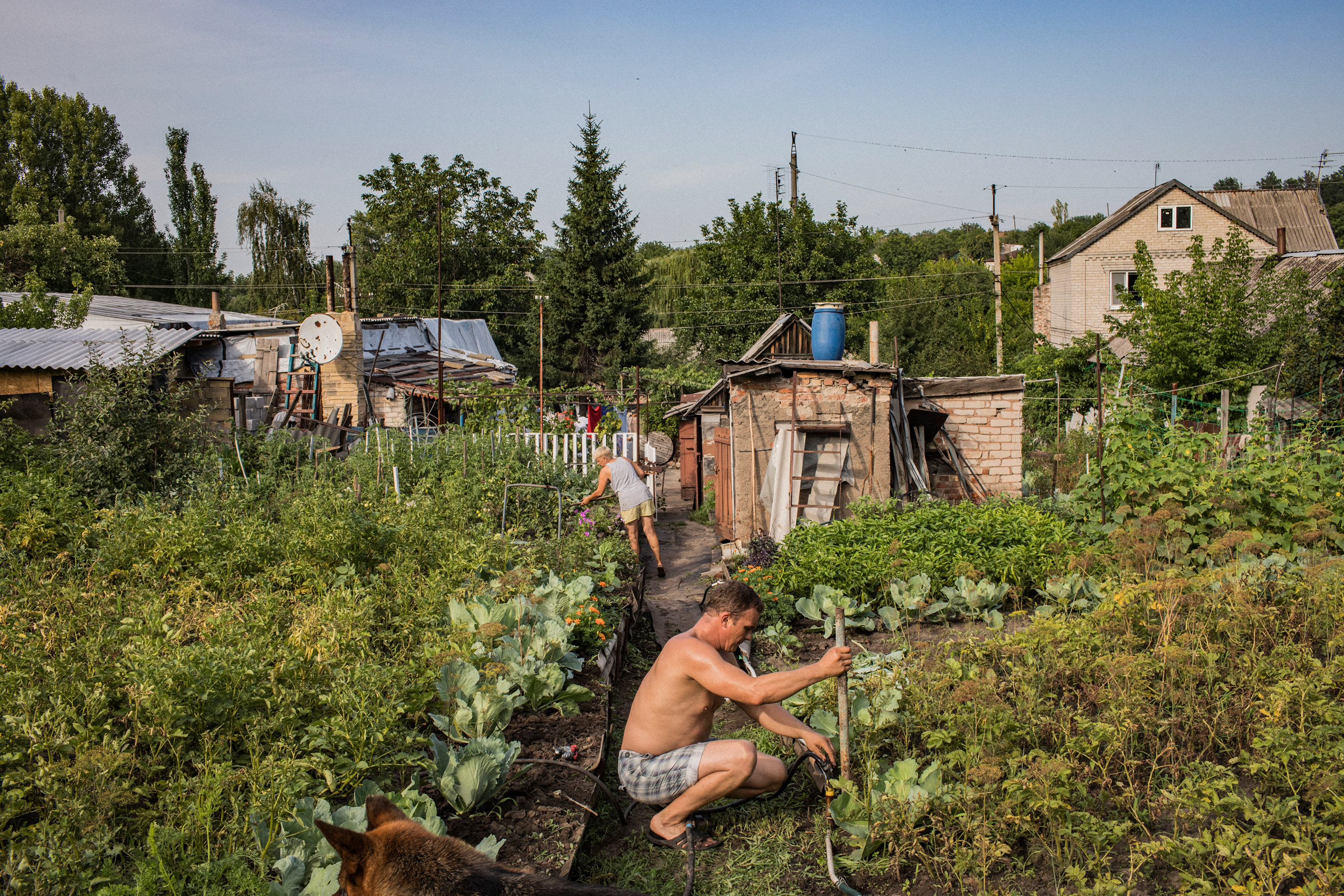 Elena Dyachkova and Aleksander Dokalenko garden in their backyard in old Avdeevka. Their property has been shelled multiple times and the house has received three direct hits. Often they find bullets and shrapnel among their tomato and cucumber beds.