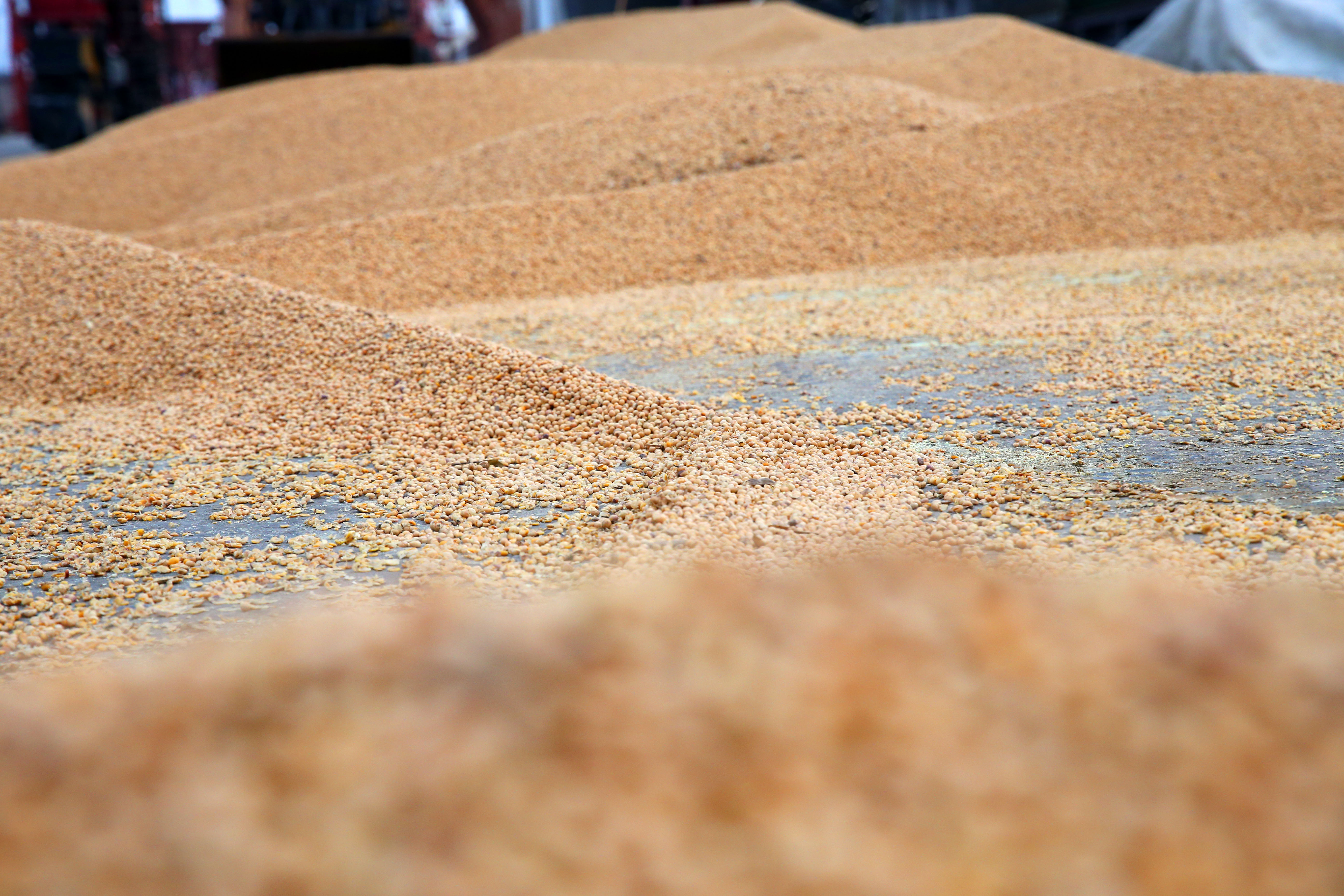 Soybeans imported from Brazil are seen at Nantong Port in August in Nantong, Jiangsu Province of China.