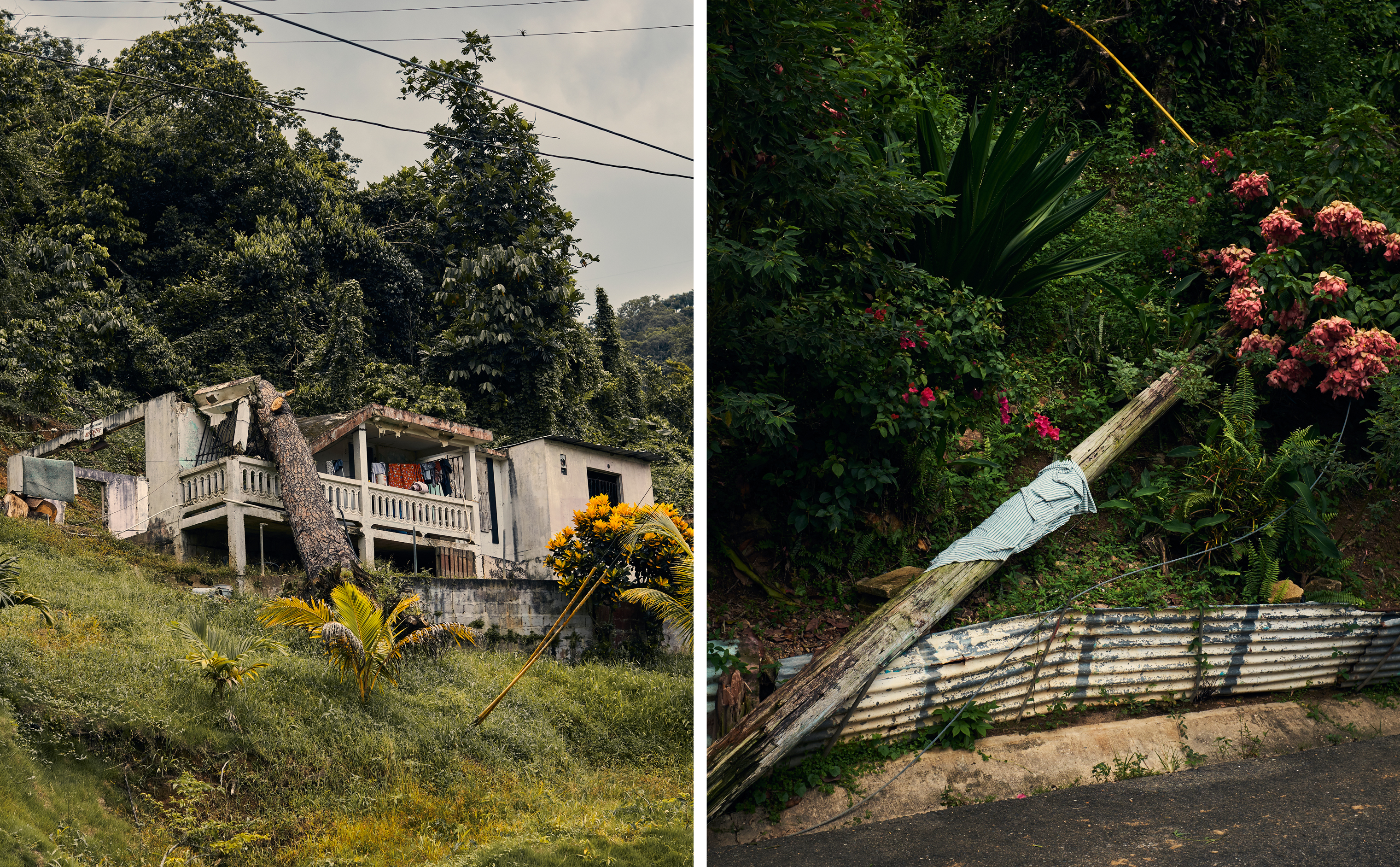 A house damaged by a fallen tree in the Caníaco neighborhood of Utuado; a downed power line.