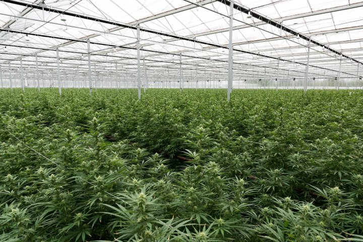 GW Pharmaceuticals growing facility