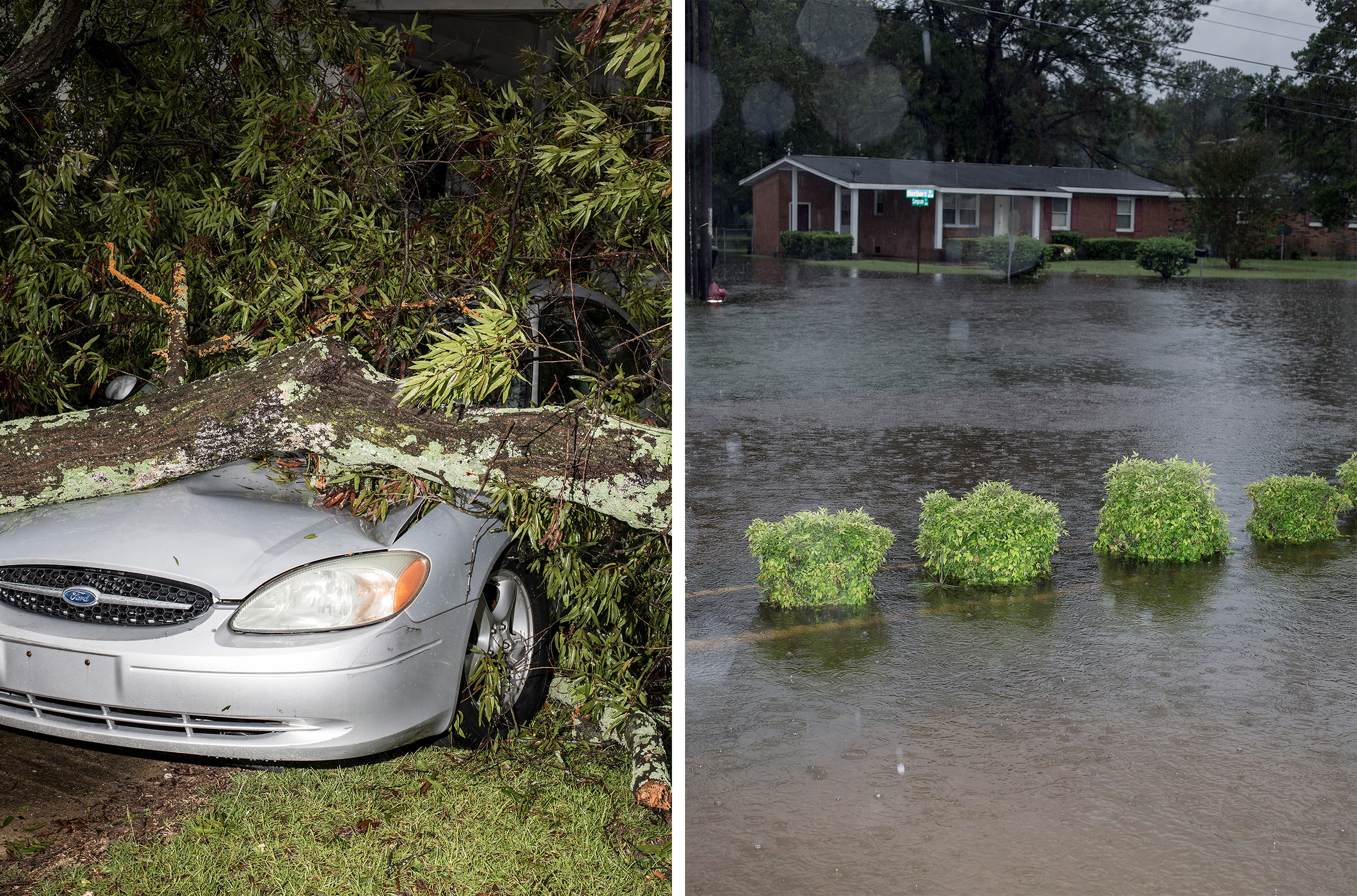A car which was crushed by a fallen tree due to winds from Hurricane Florence in Goldsboro, N.C. on Sept. 15.; A view of Coy Coley's driveway in Goldsboro.