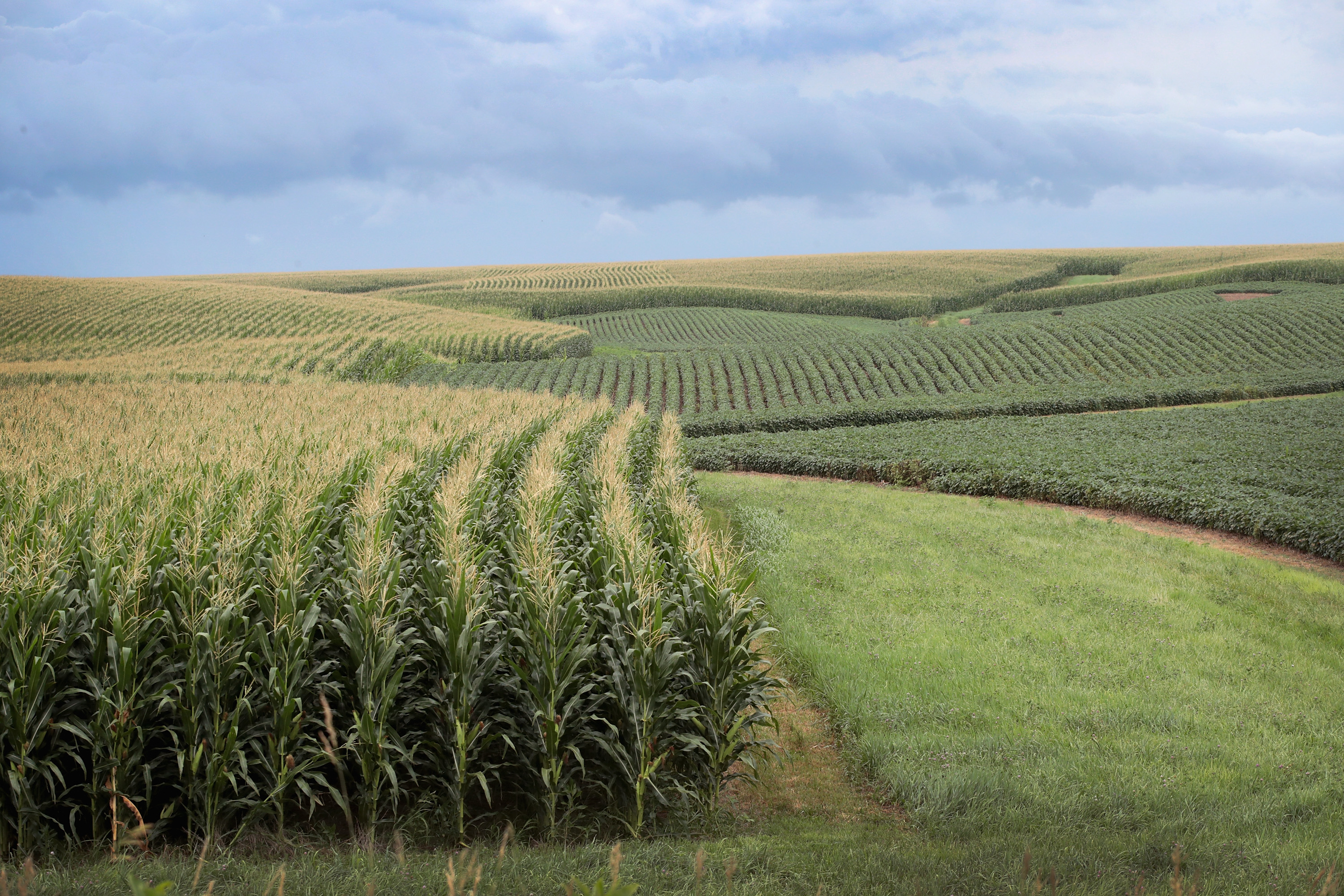 Corn and soybeans grow on a farm on July 13 near Tipton, Iowa.