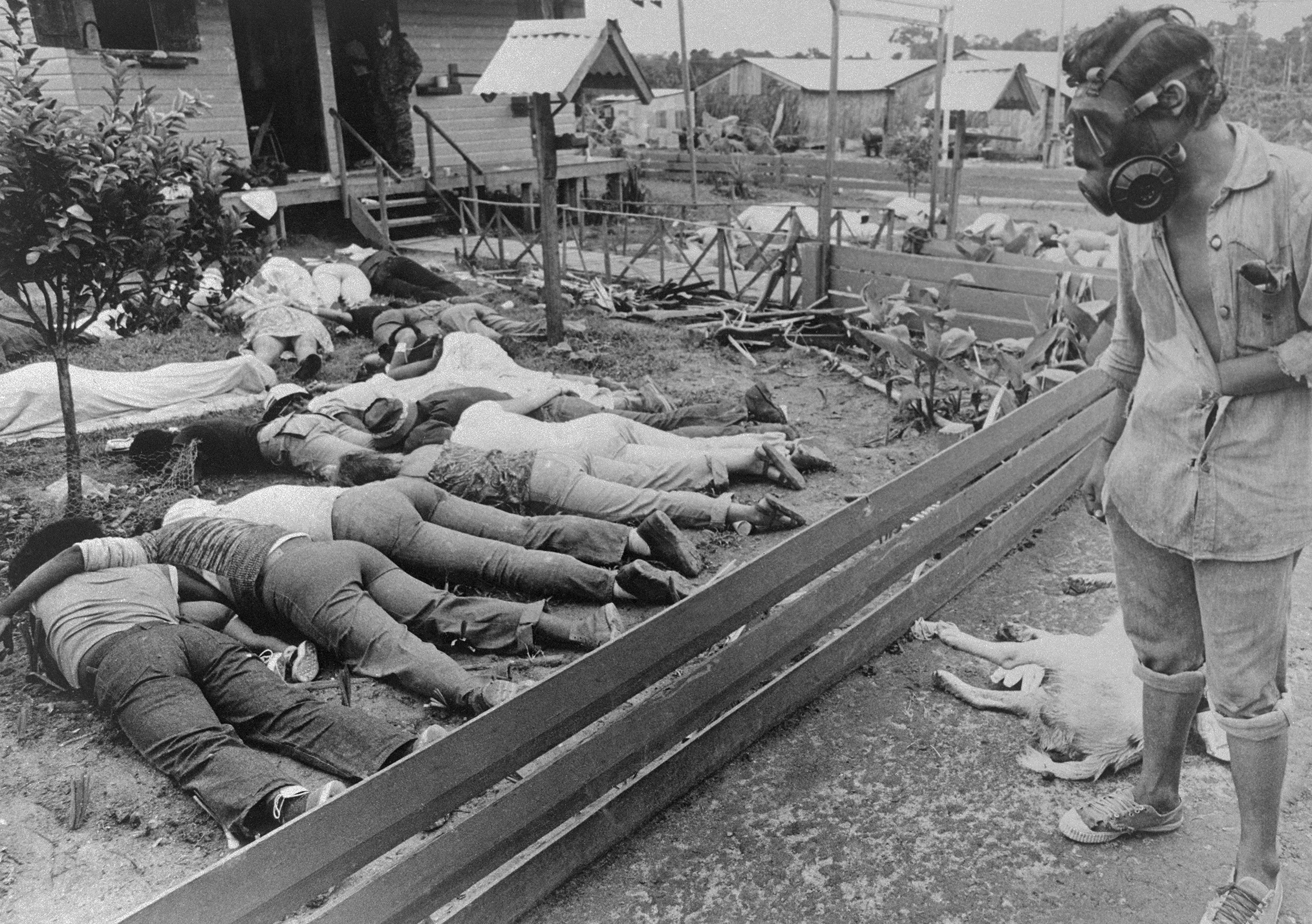 A member of the team sent to Jonestown by the Guyana Government surveys some of the hundreds of bodies of People's Temple followers who died following the murder of Congressman Leo Ryan and newsman on November 18. Authorities said that five, including cult leader Jim Jones, died of gunshot wounds. Most, however, died of cyanide poisoning.
