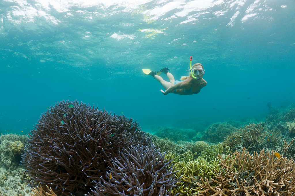A snorkeler in Palau among its world-famous coral reefs.