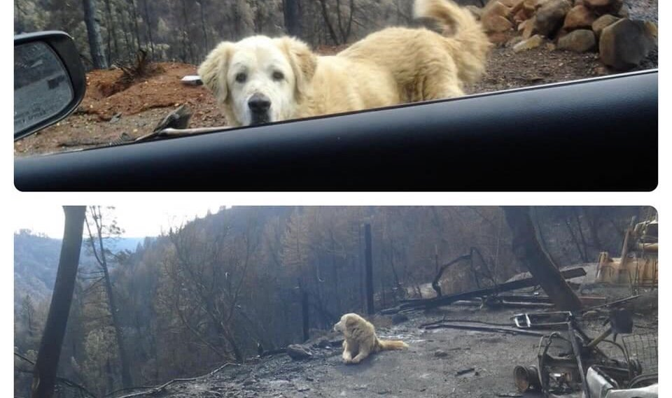 Couple Returns to Home Lost in California's Camp Fire to Find Their Dog Waiting for Them