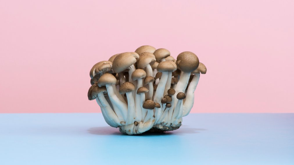 Are Mushrooms Healthy? Here's What Experts Say | Time