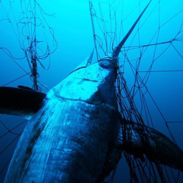 oceans-in-peril