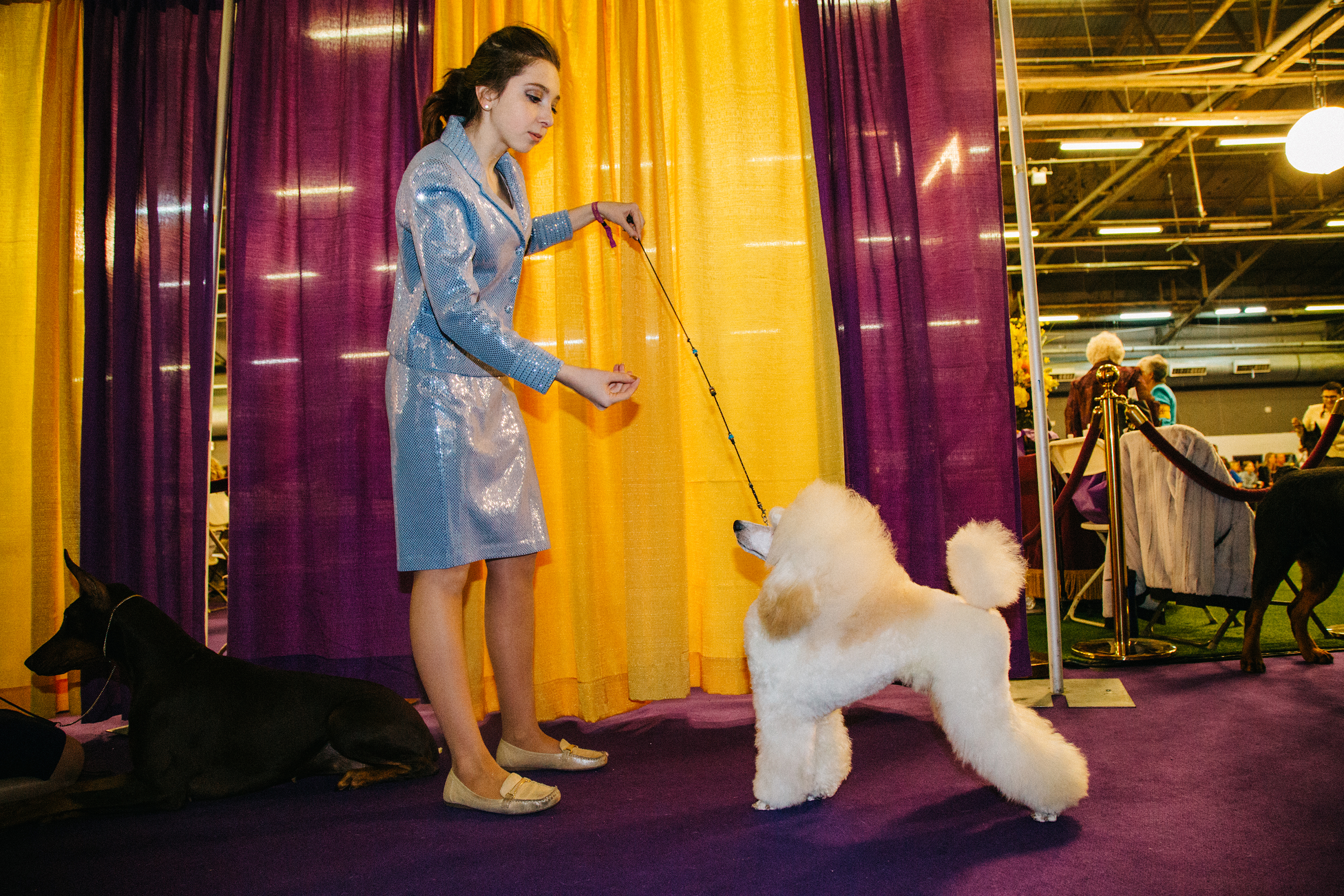 More than 3,000 dogs from 204 breeds compete in the Westminster Kennel Club's weeklong series of events