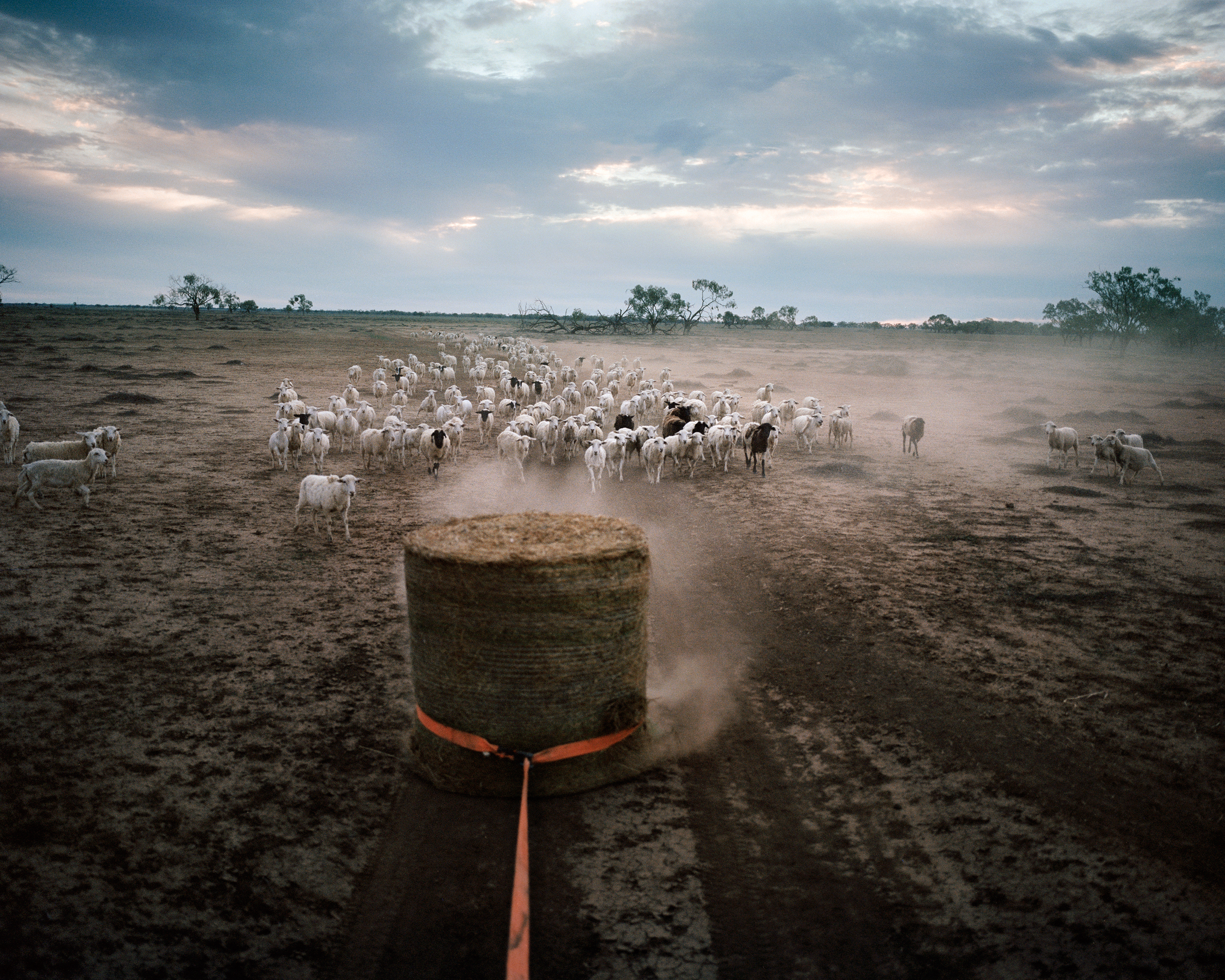 Australia's Farmers Struggle With Its Hottest-Ever Drought | Time