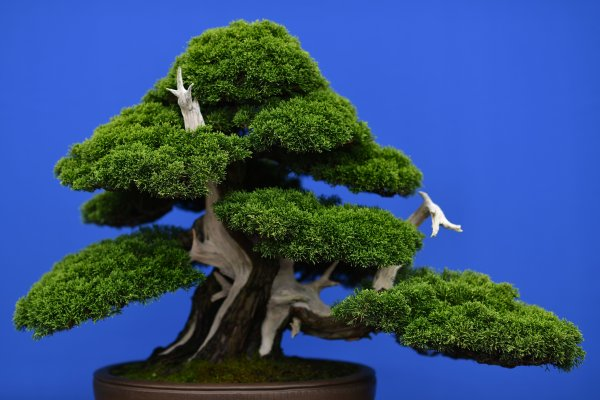 Couple Pleads For The Return Of Stolen Bonsai Trees Time