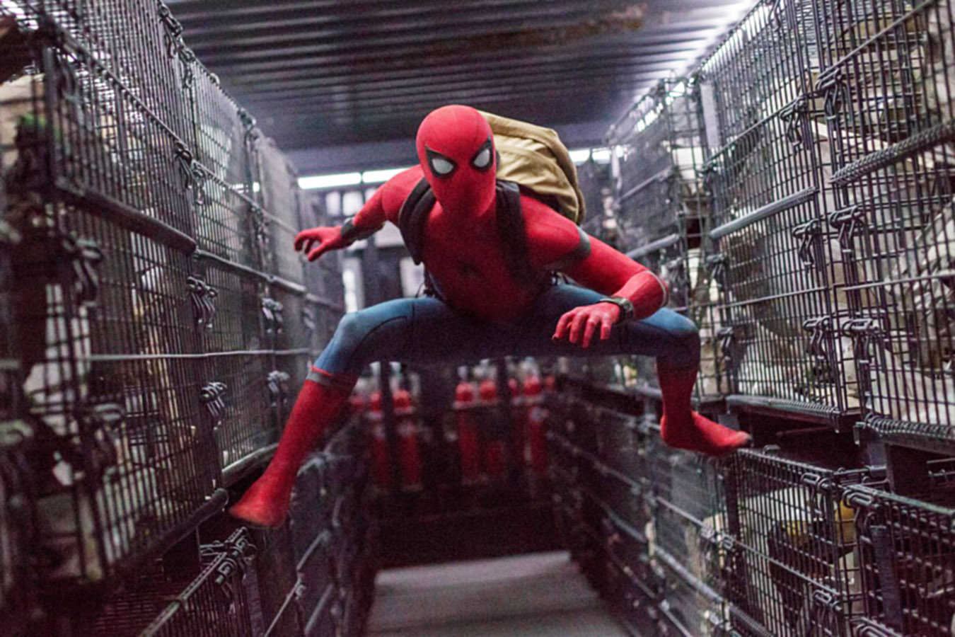 Avengers Endgame What S Next For Marvel Cinematic Universe