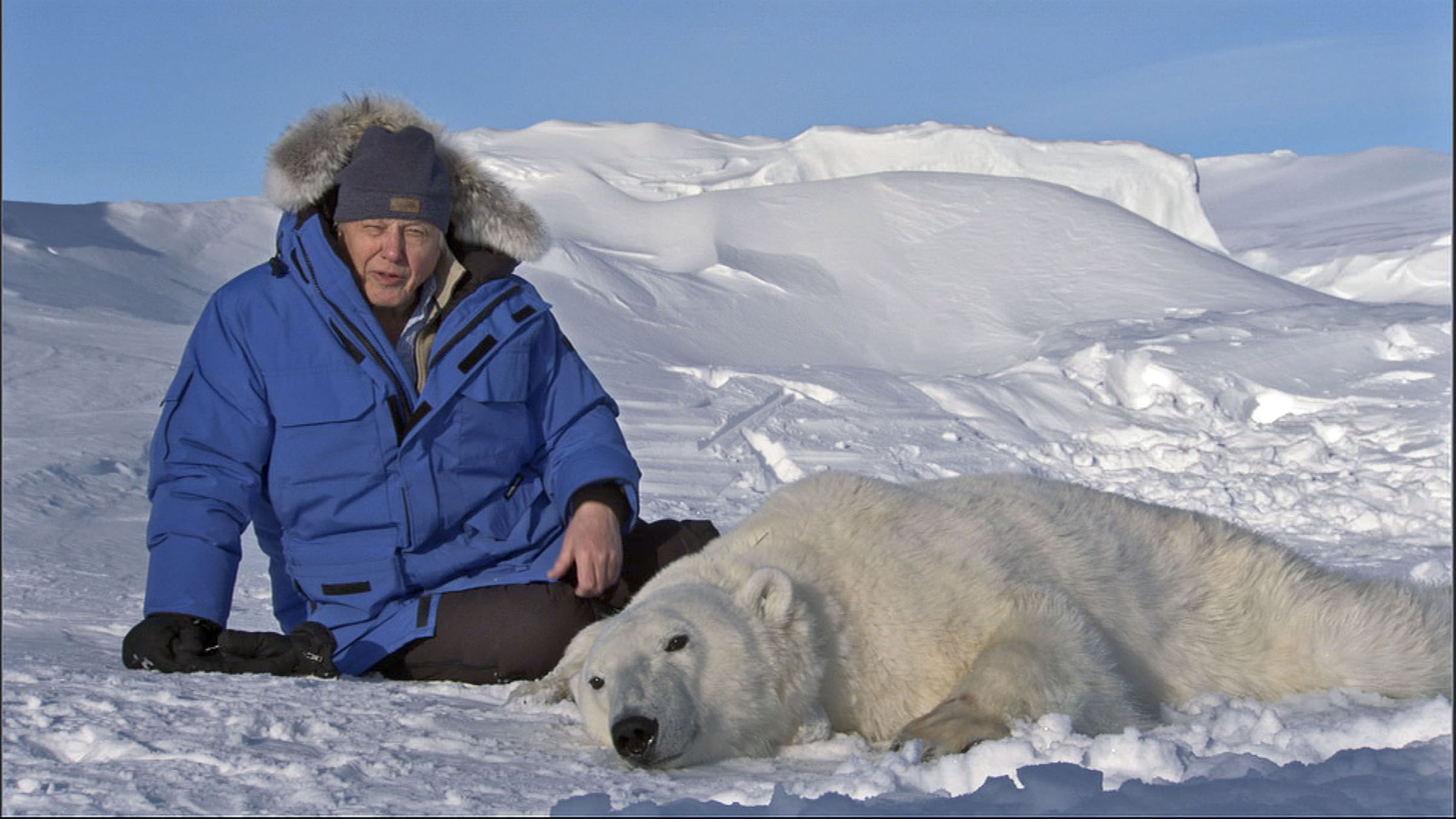 Attenborough with an anesthetized polar bear in Svalbard, Norway
