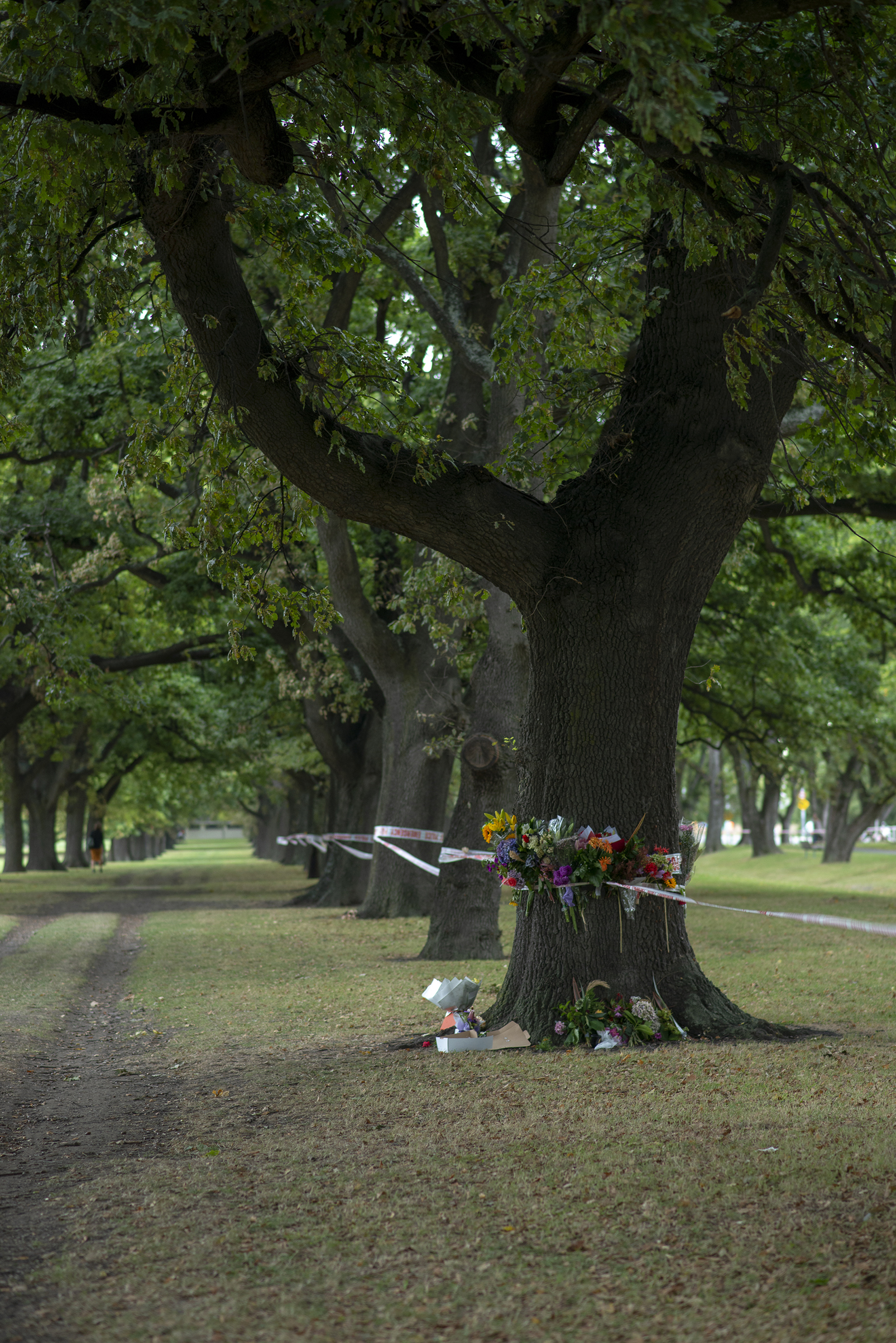Memorial Tree in Hagley Park across from Al Noor Mosque. Christchurch NZ ChCh_mosqueshootings_20190317_0152