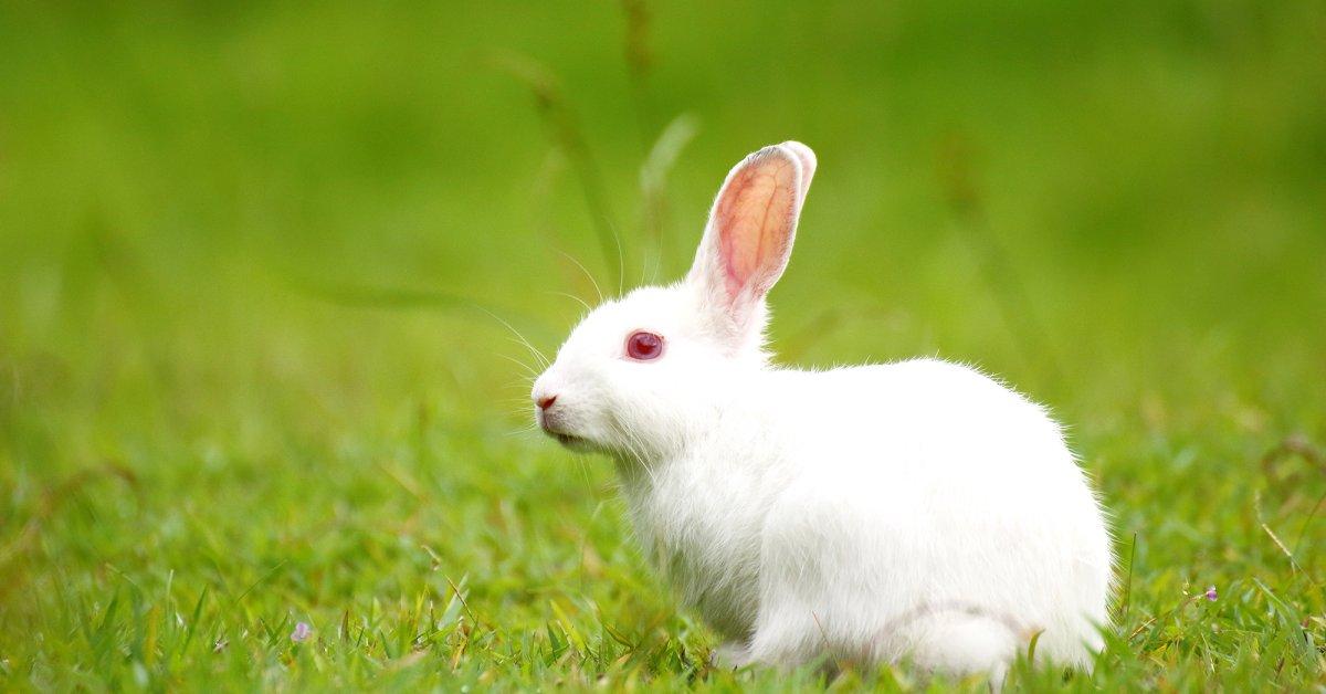 rabbit chinese sign