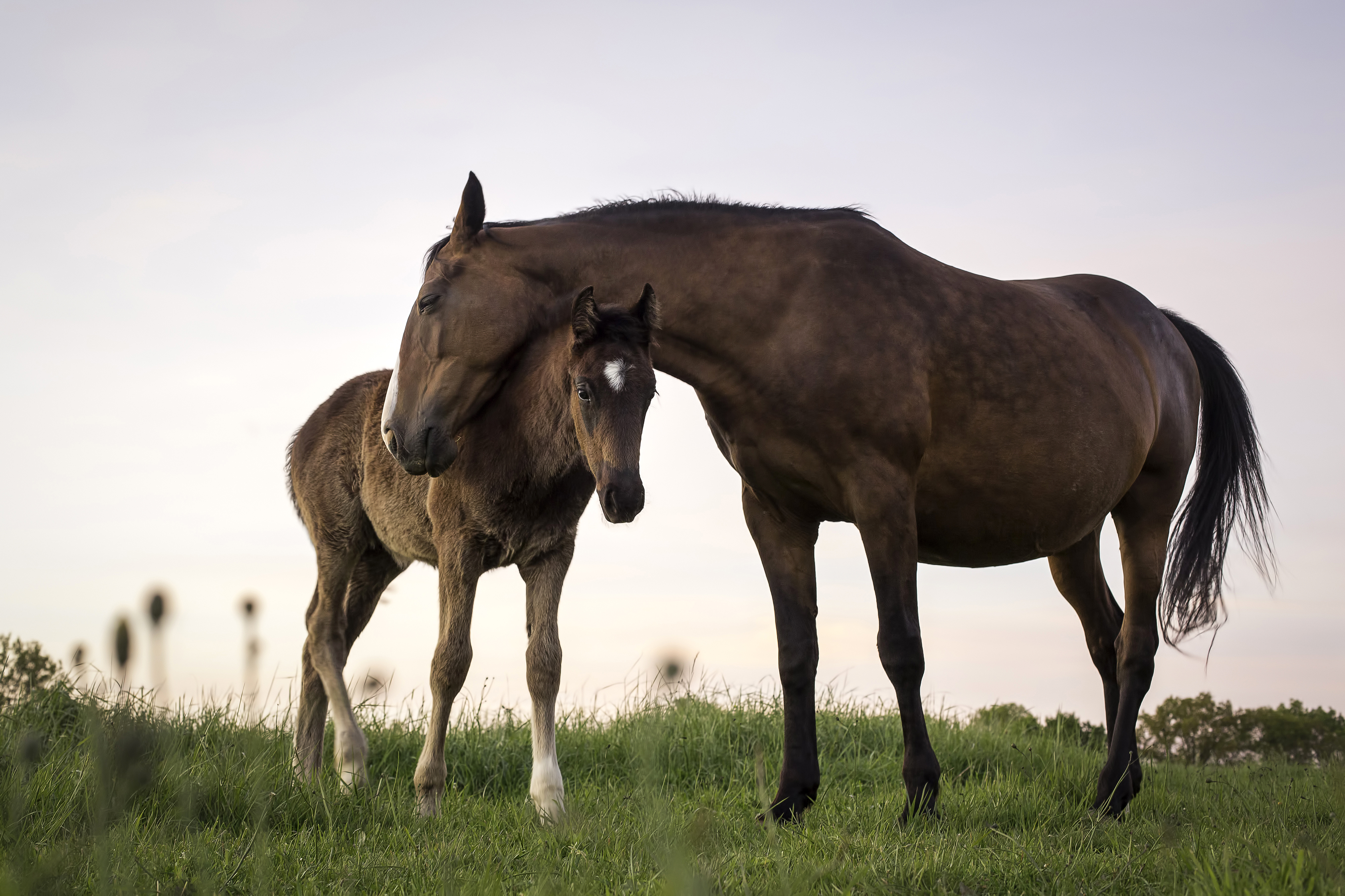 Adopt a wild horse and government will give you $1,000