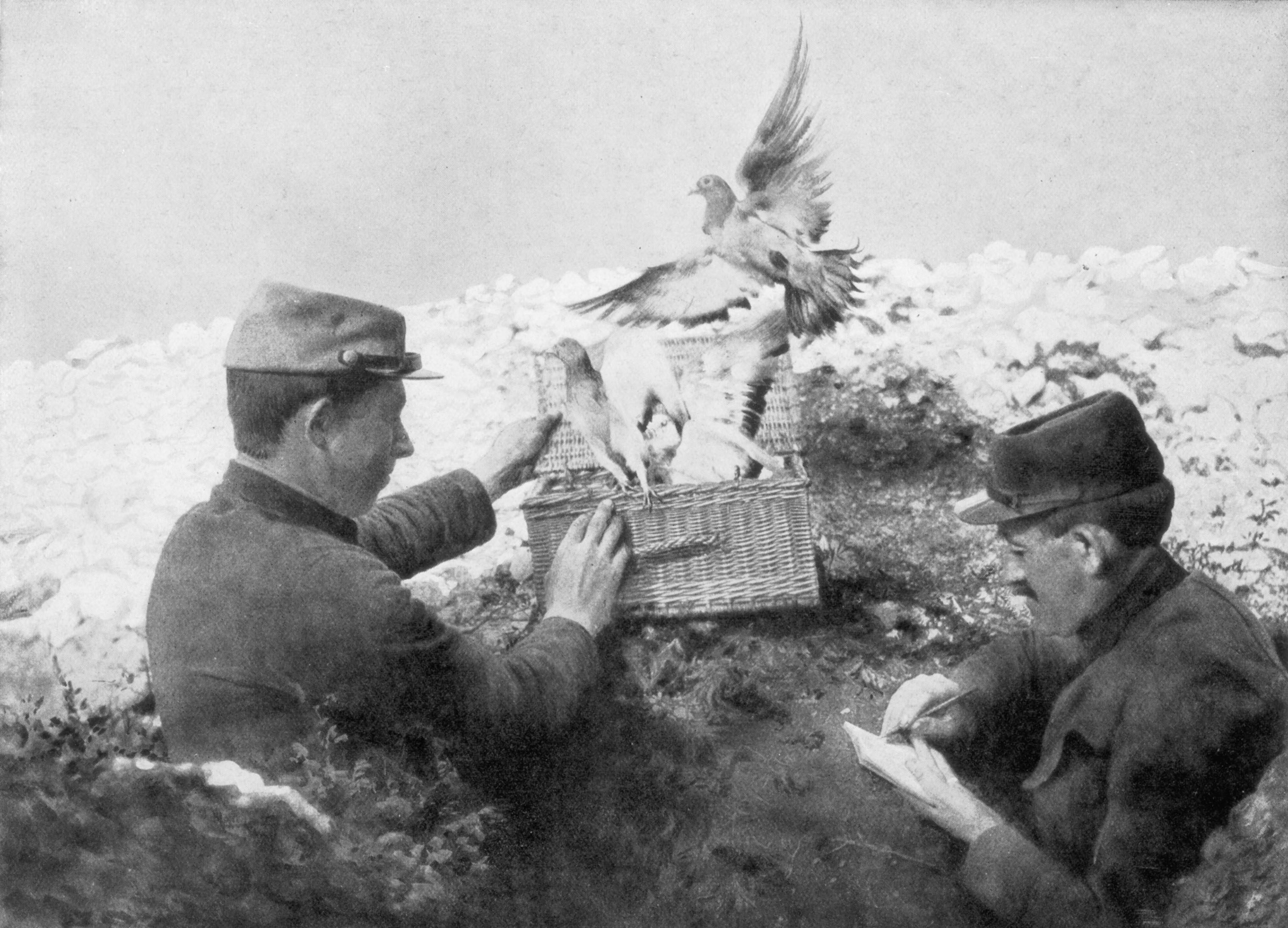 Messenger pigeons being released at the front line during World War I in 1915.