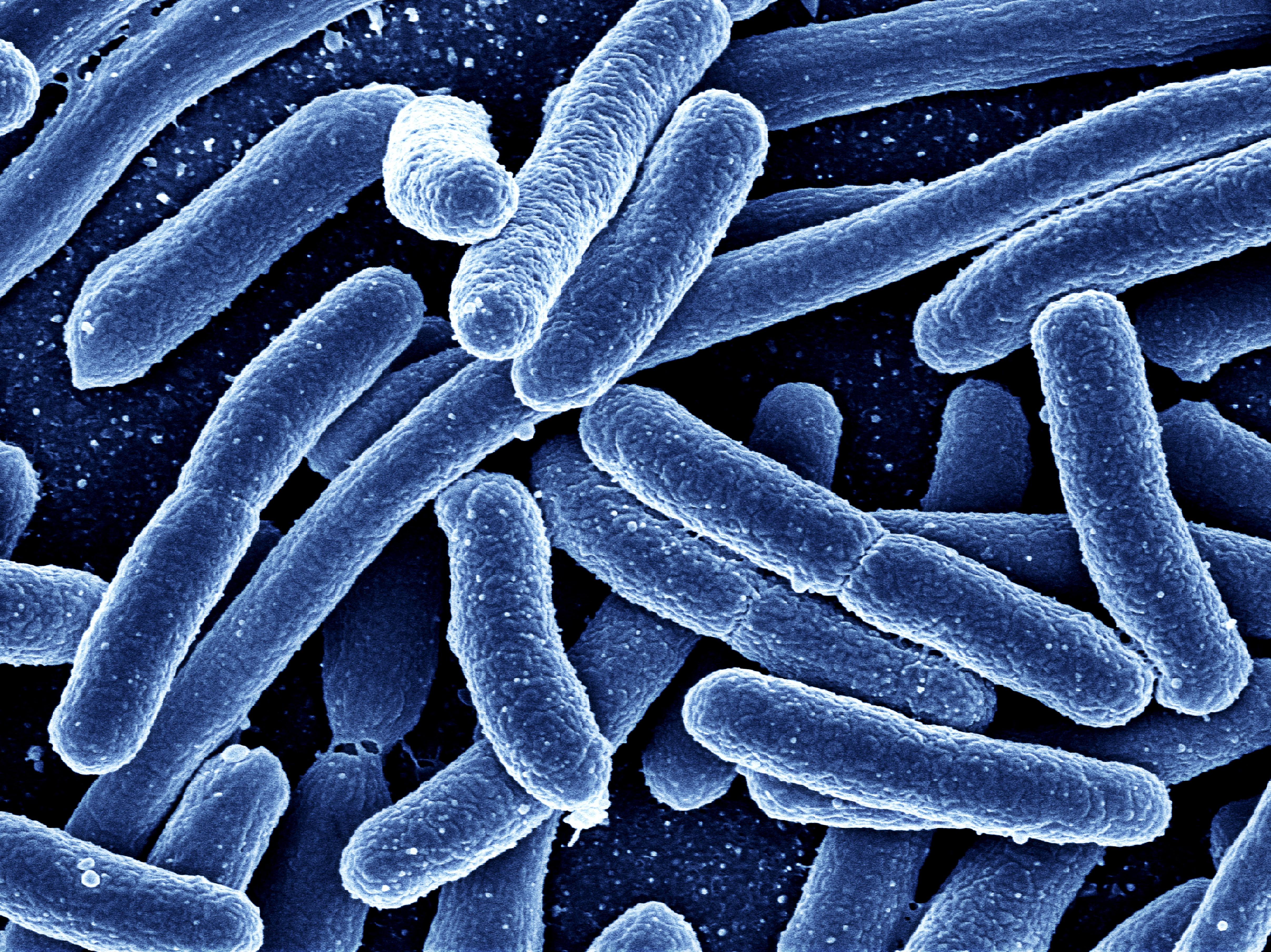 Just one of the many bacteria living in your body.