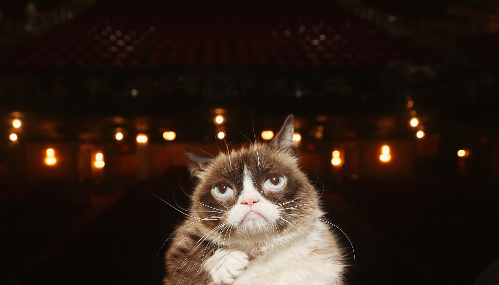 Grumpy Cat Dies After Infection