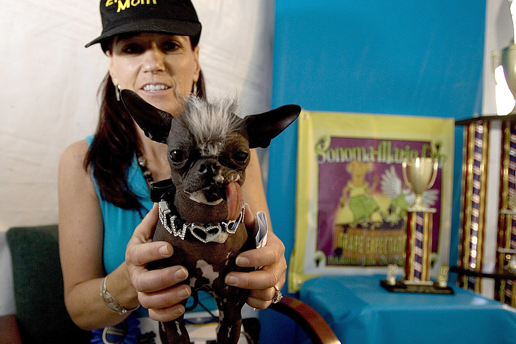 Karen Quigley, from Seweel, New Jersey poses with her Chinese Crested dog, Elwood who won the 2007 World's Ugliest Dog Contest June 22, 2007 in Petaluma, California. Elwood, who weighs in at just six pounds, was rescued after a New Jersey SPCA investigation.