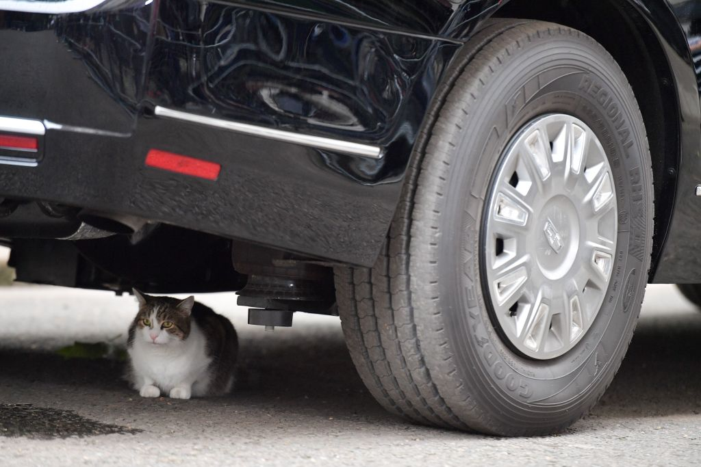 Larry the Downing Street cat sits underneath The Beast, the armored Cadillac of U.S. President Donald Trump, in Downing Street in London on June 4, 2019, on the second day of their three-day State Visit to the U.K.