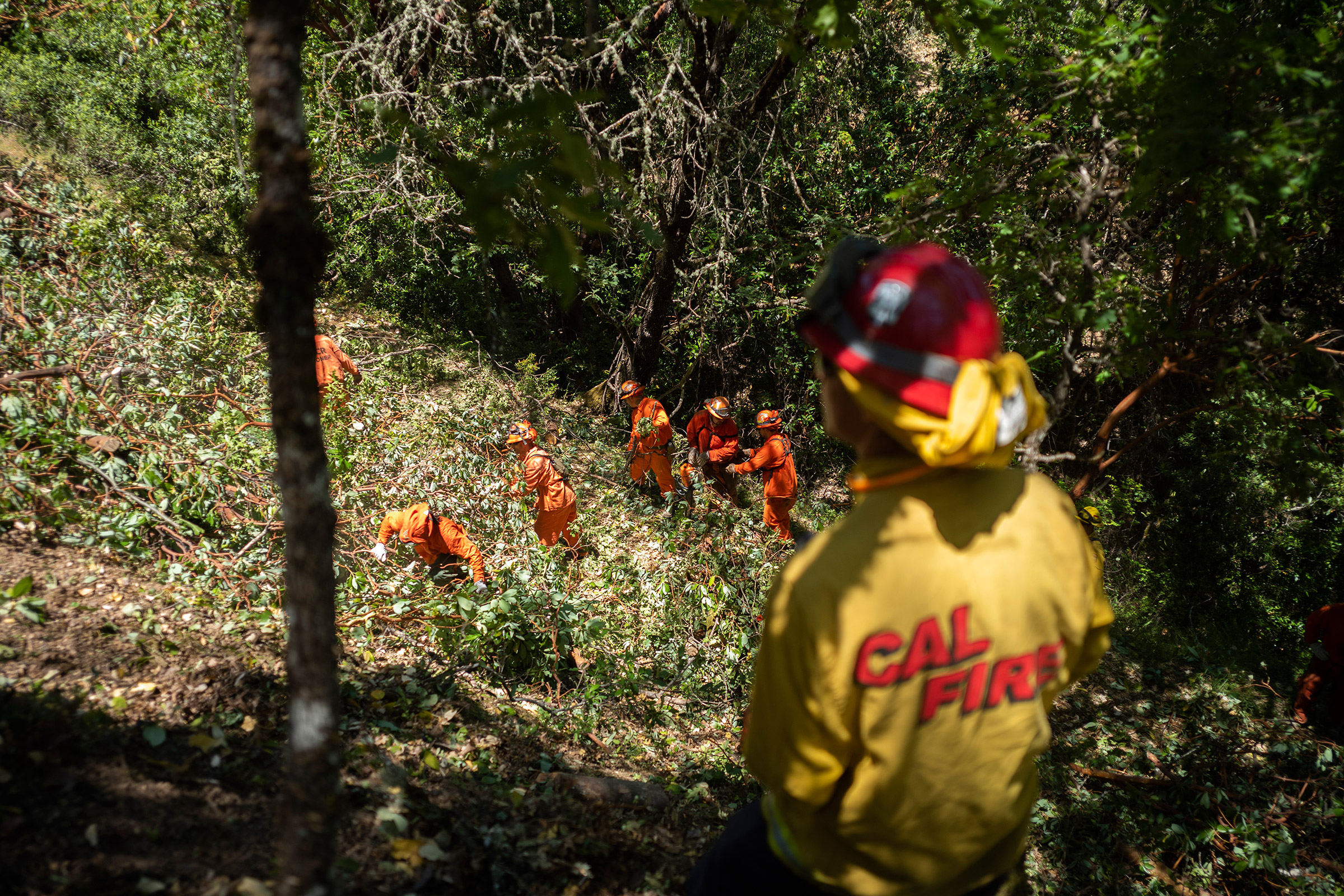 Fire crews cut brush in the hills around Ukiah, Calif., on Wednesday, June 19, 2019.