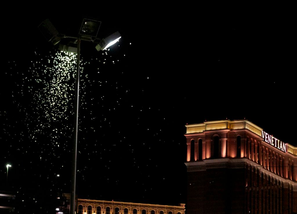 Grasshoppers swarm a light a few blocks off the Strip on July 26, 2019 in Las Vegas, Nevada.