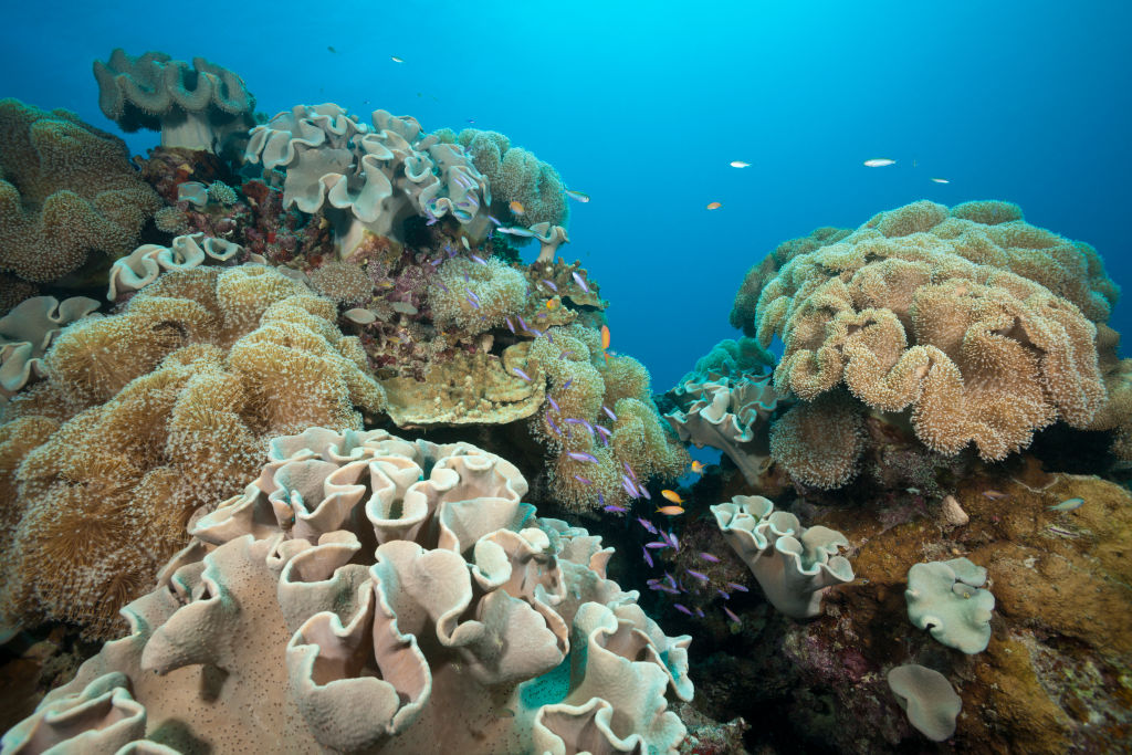 Coral species are seen in the Great Barrier Reef, Australia, on April 20, 2015.