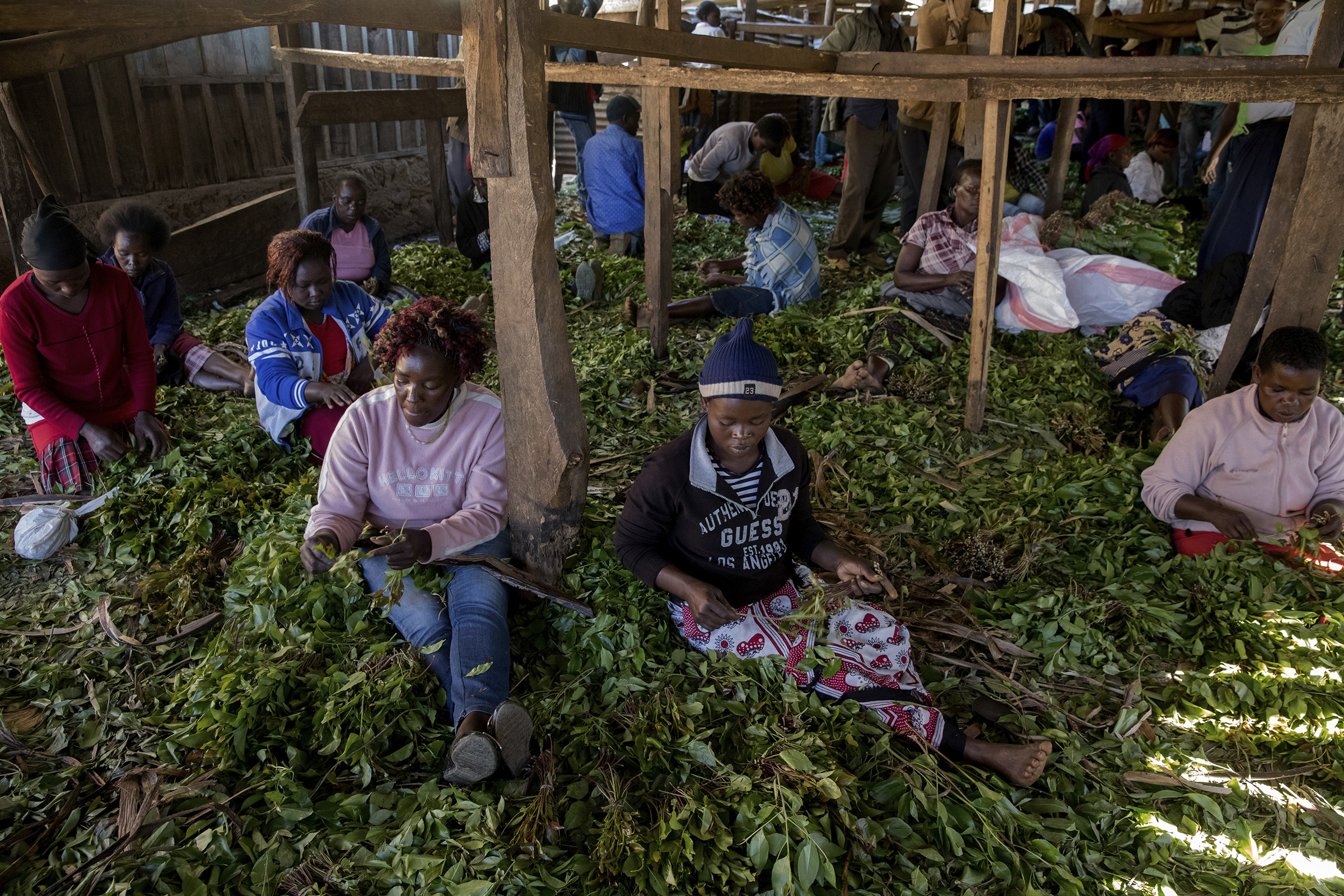 Women make packages of khat leaves using banana leaves to wrap the drug at Athiru Gaiti's (Atherogaitu) khat market in Kenya in 2017.