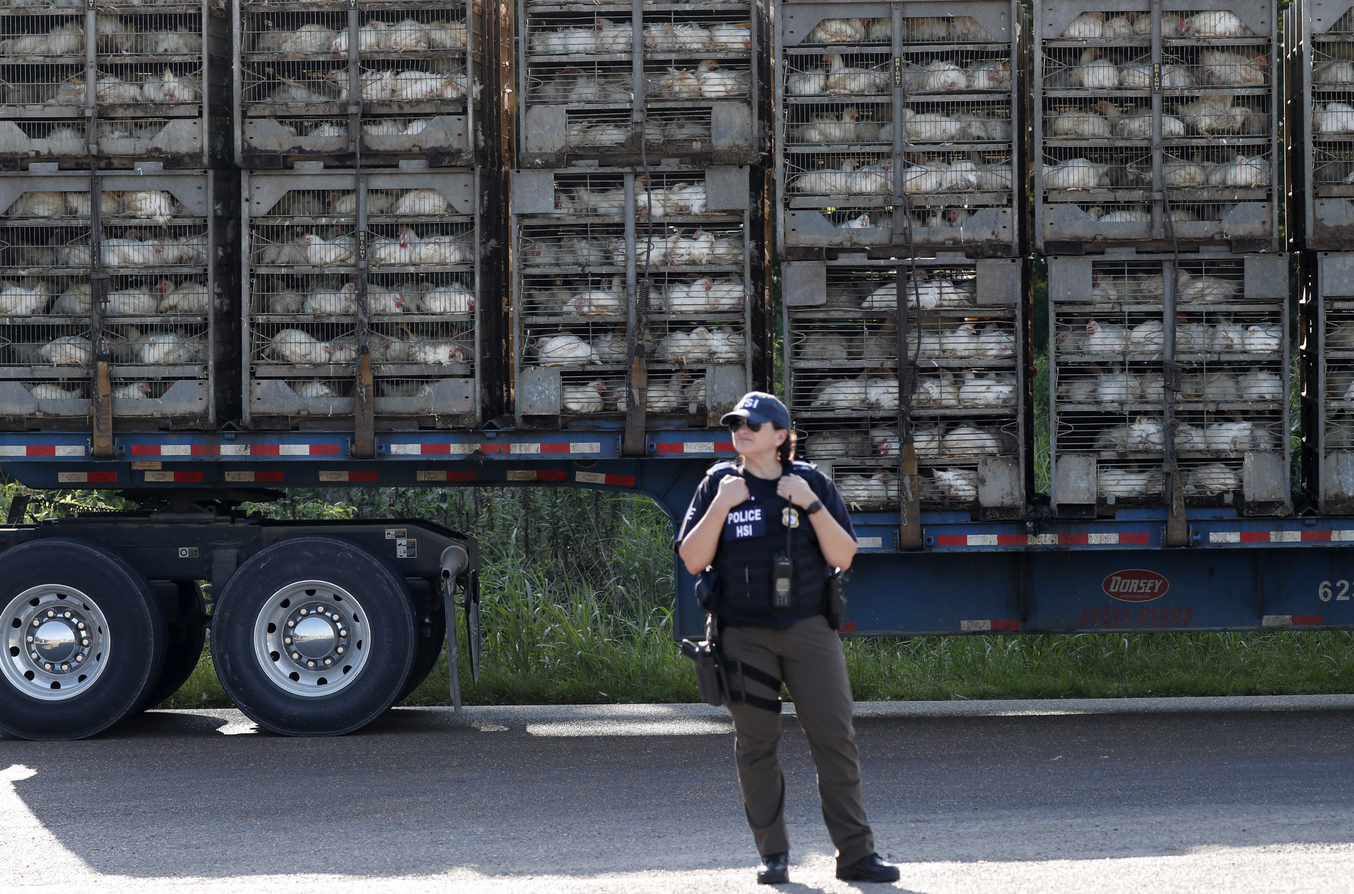 A trailer loaded with chickens passes a federal agent outside a Koch Foods Inc., plant in Morton, Miss. Wednesday, Aug. 7, 2019. U.S. immigration officials raided several Mississippi food processing plants on Wednesday and signaled that the early-morning strikes were part of a large-scale operation targeting owners as well as employees.