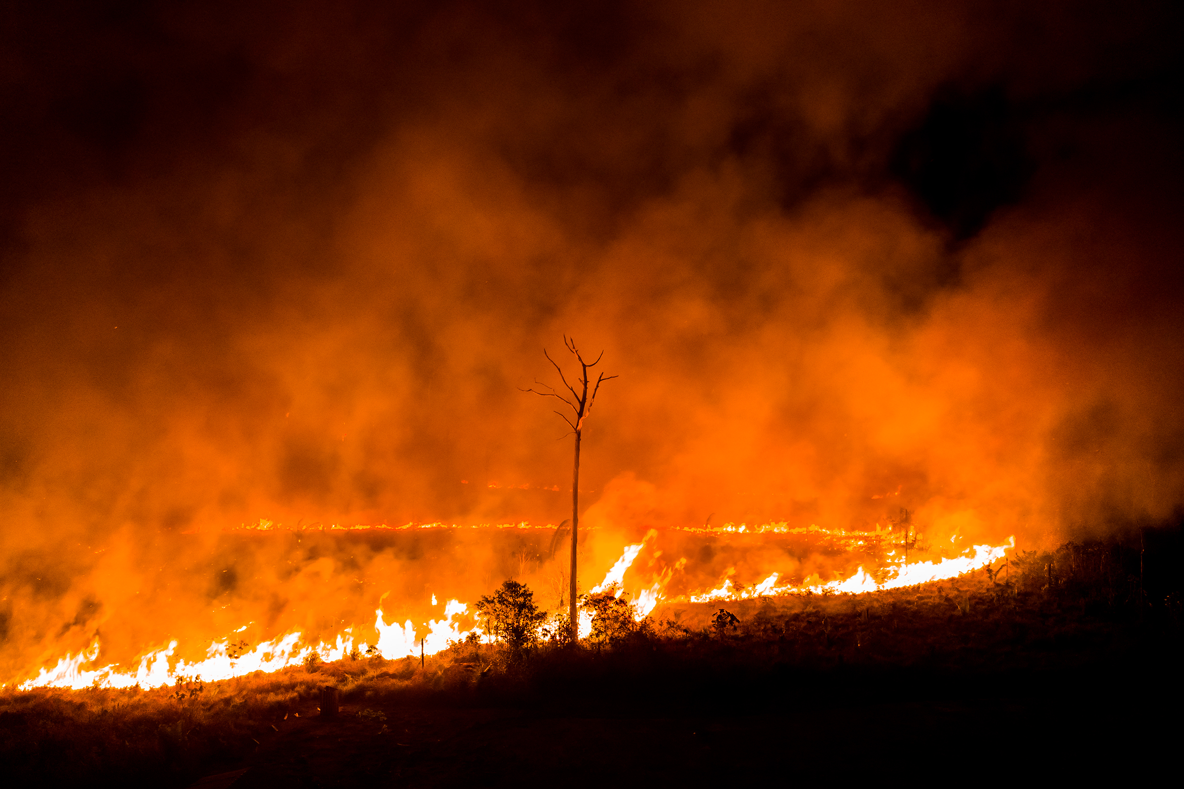 Image result for images of Amazon rainforest fire in 2019