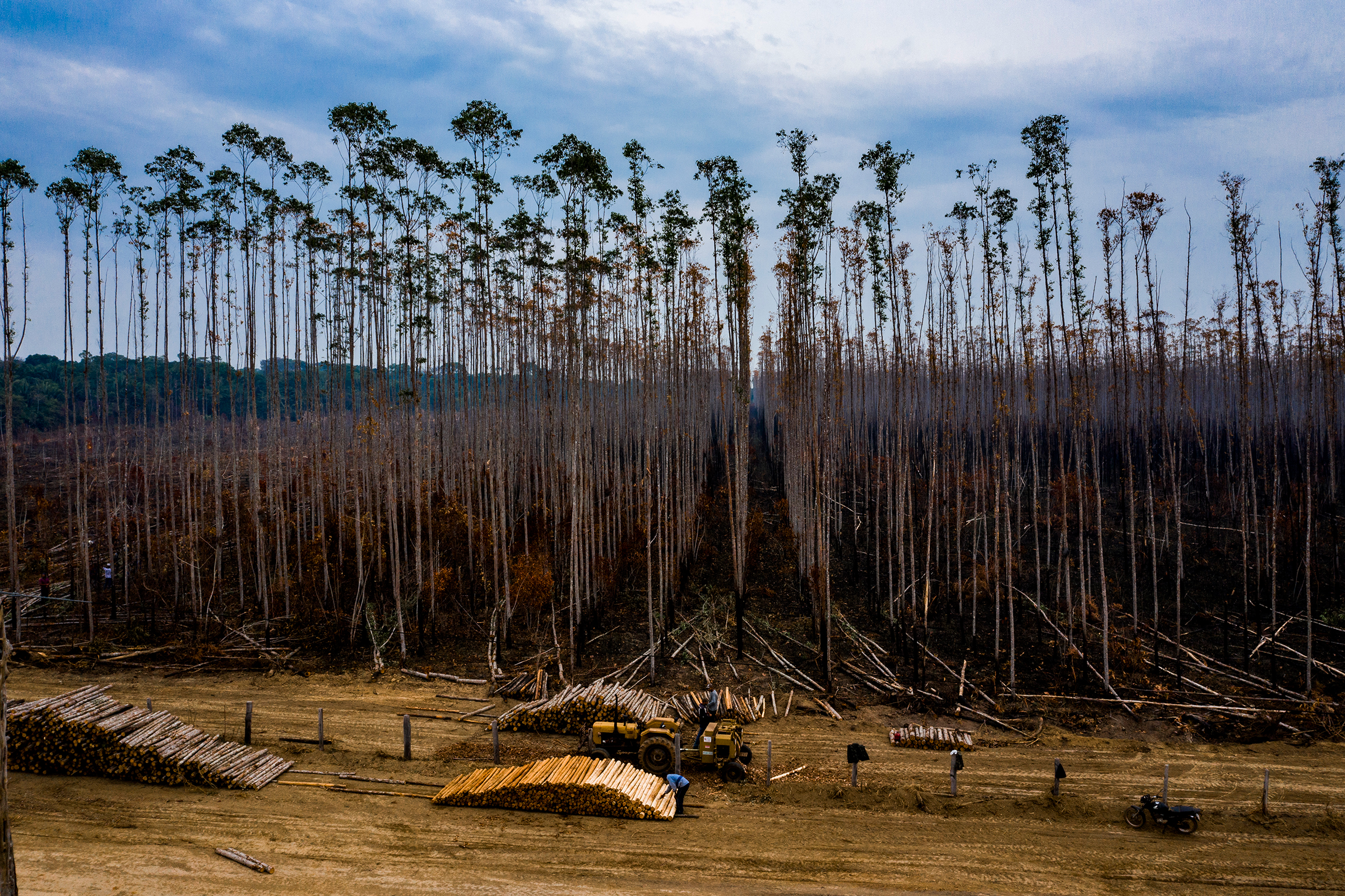Burned trees behind piles of logs at a eucalyptus plantation in Porto Velho on Aug. 26.