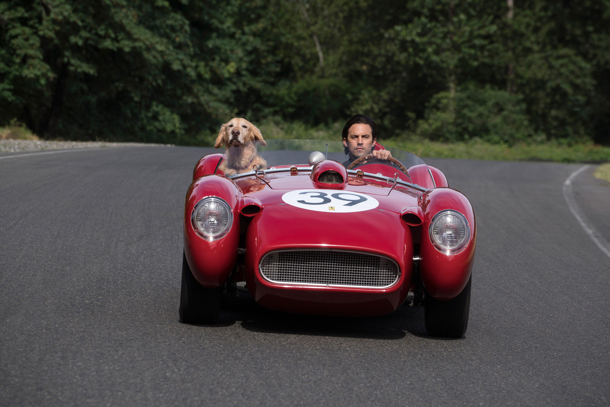 Ventimiglia and friend: If only dogs could drive! And also make movies.