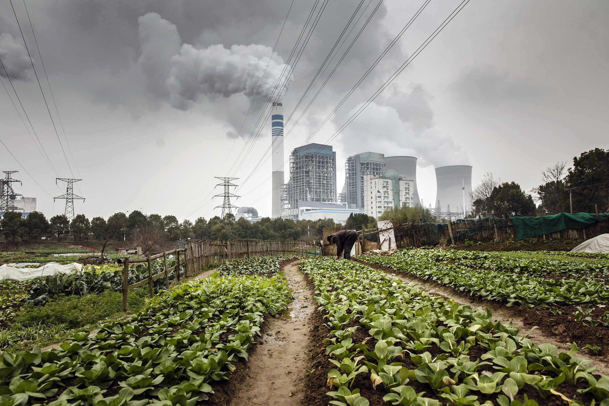 A man tends to vegetables growing in a field as emissions rise from cooling towers at a coal-fired power station in Tongling, Anhui province, China, on Wednesday, Jan. 16, 2019.