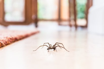 Image result for How to Get Rid of Spiders