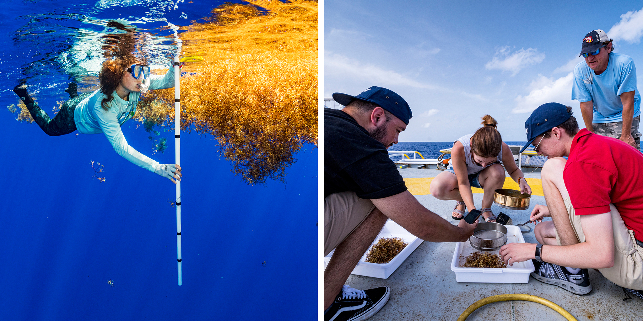 (L) University of Florida scientist Nerine Constant measures a mat of sargassum seaweed as part of the study to see if sargassum might act as an incubator to sea turtles. (R) Scientists sort microplastics shortly after trawling for it in the Sargasso Sea.