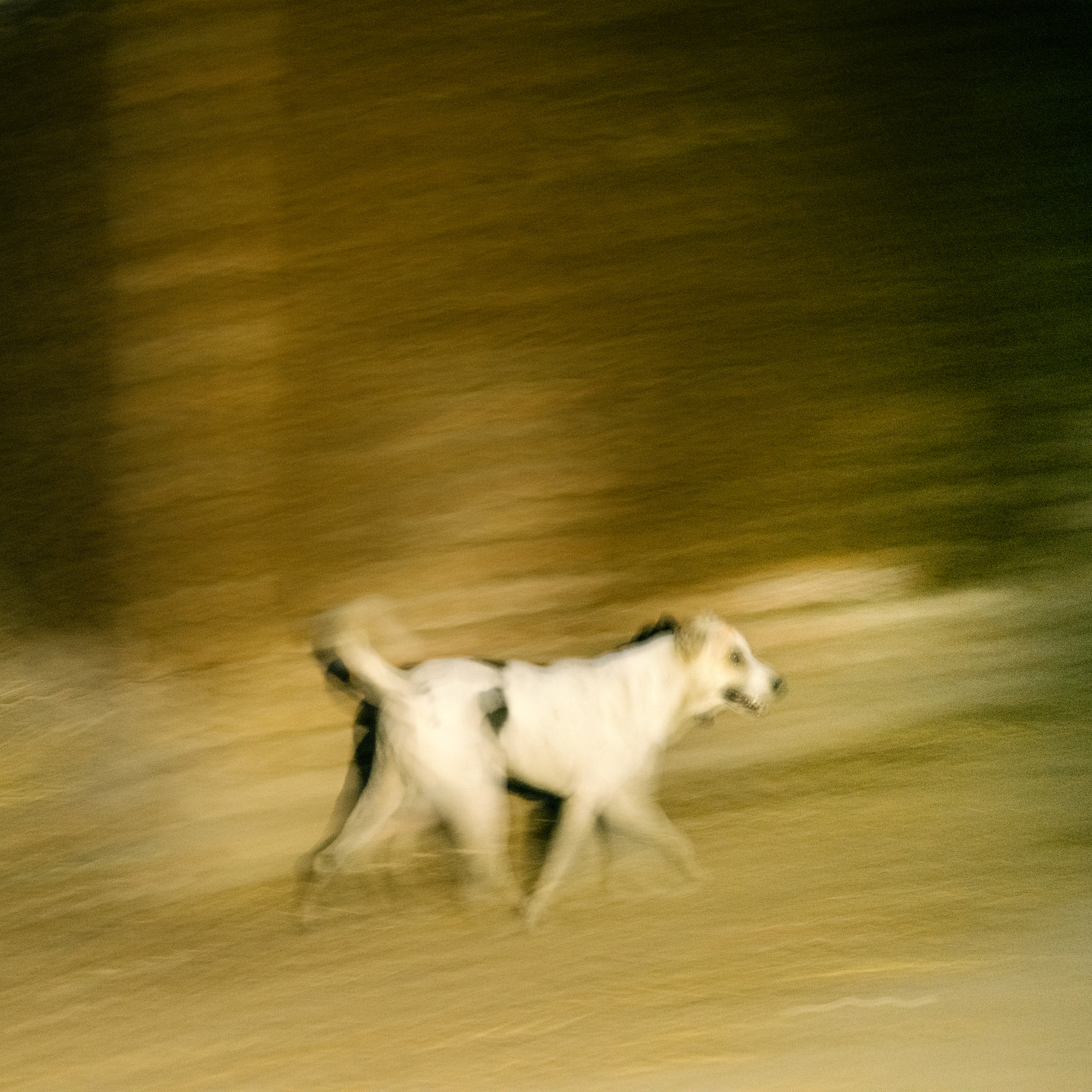 A dog runs at night in an impoverished part of Jacobabad on June 28.