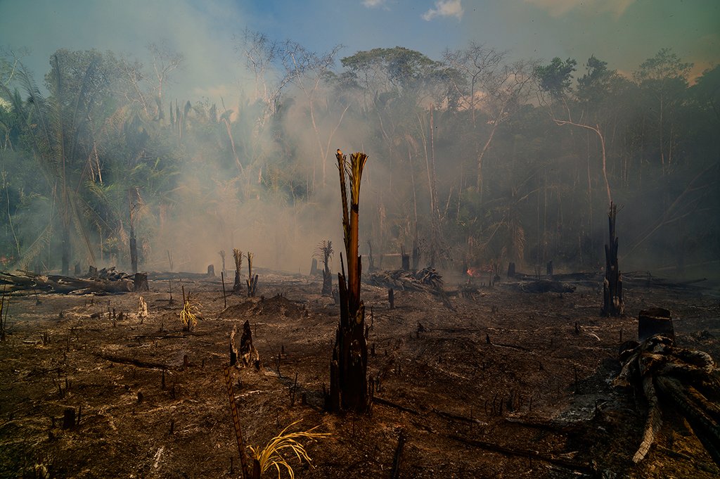 Smoke rises amid destroyed trees near Realidade on Aug. 26.