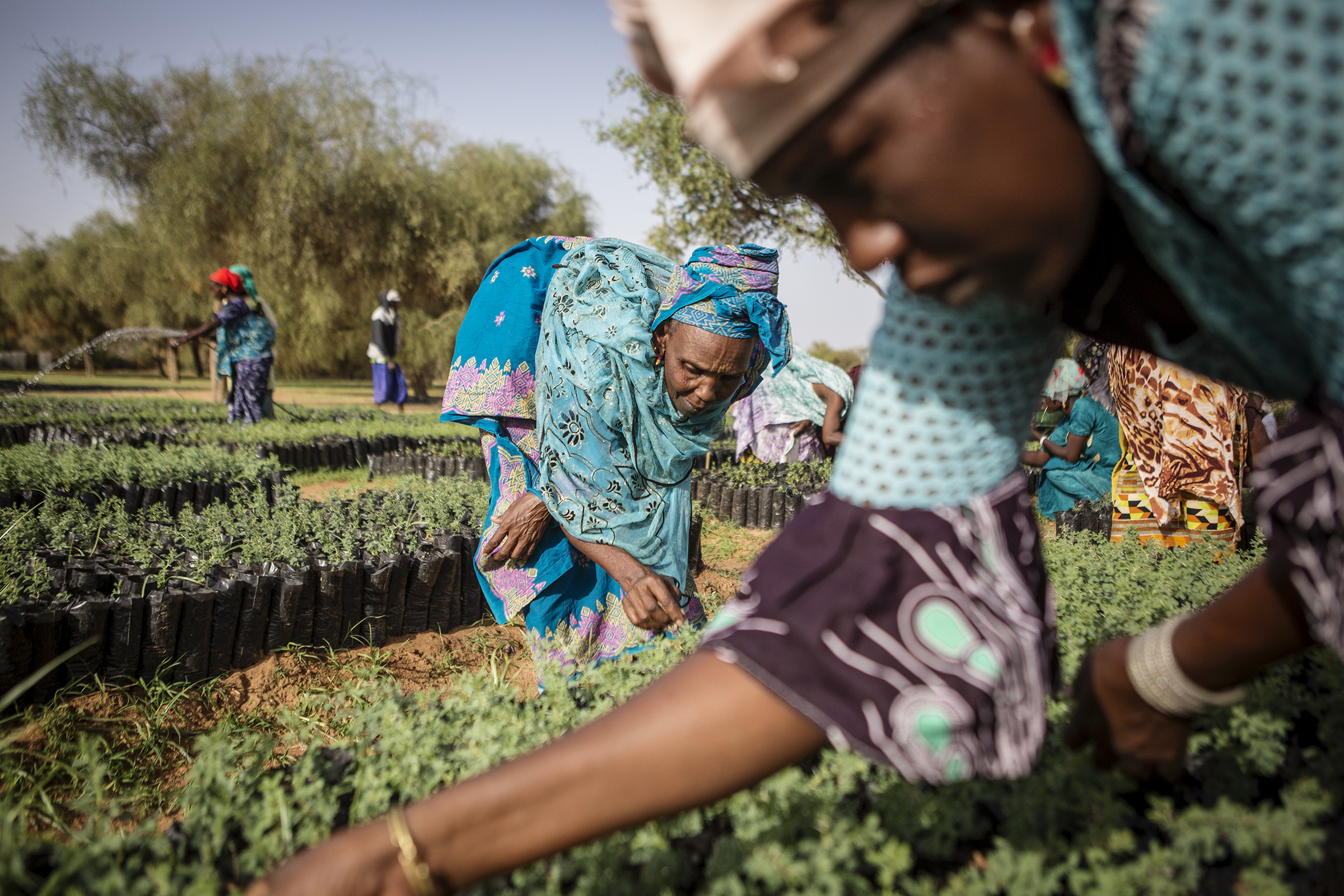 Members of a women's association pull weeds from seedlings that will eventually be replanted in Koyli Alpha, Senegal.