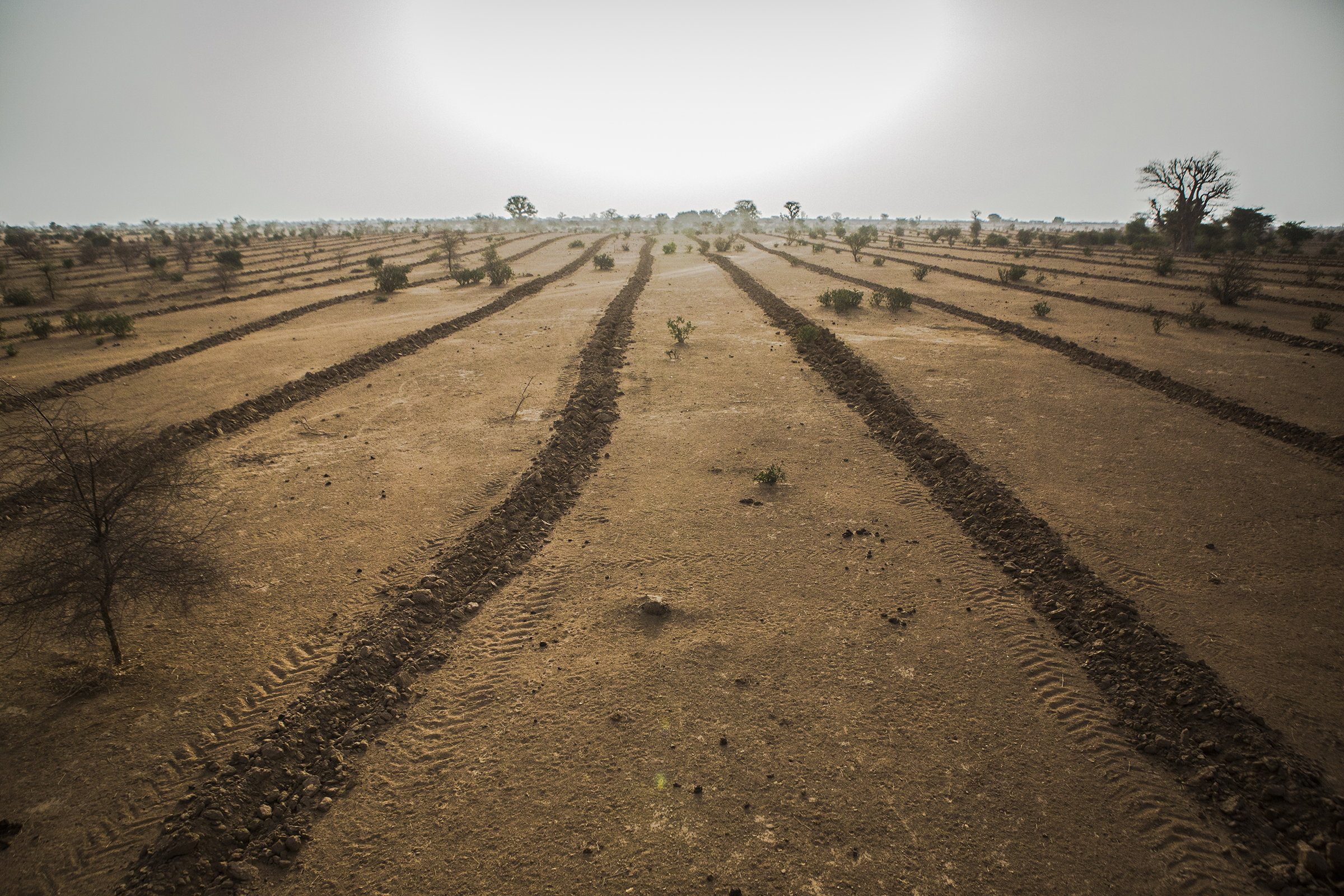Land in Mbar Toubab, Senegal, which was plowed in anticipation of the planting of seedlings for the Great Green Wall.