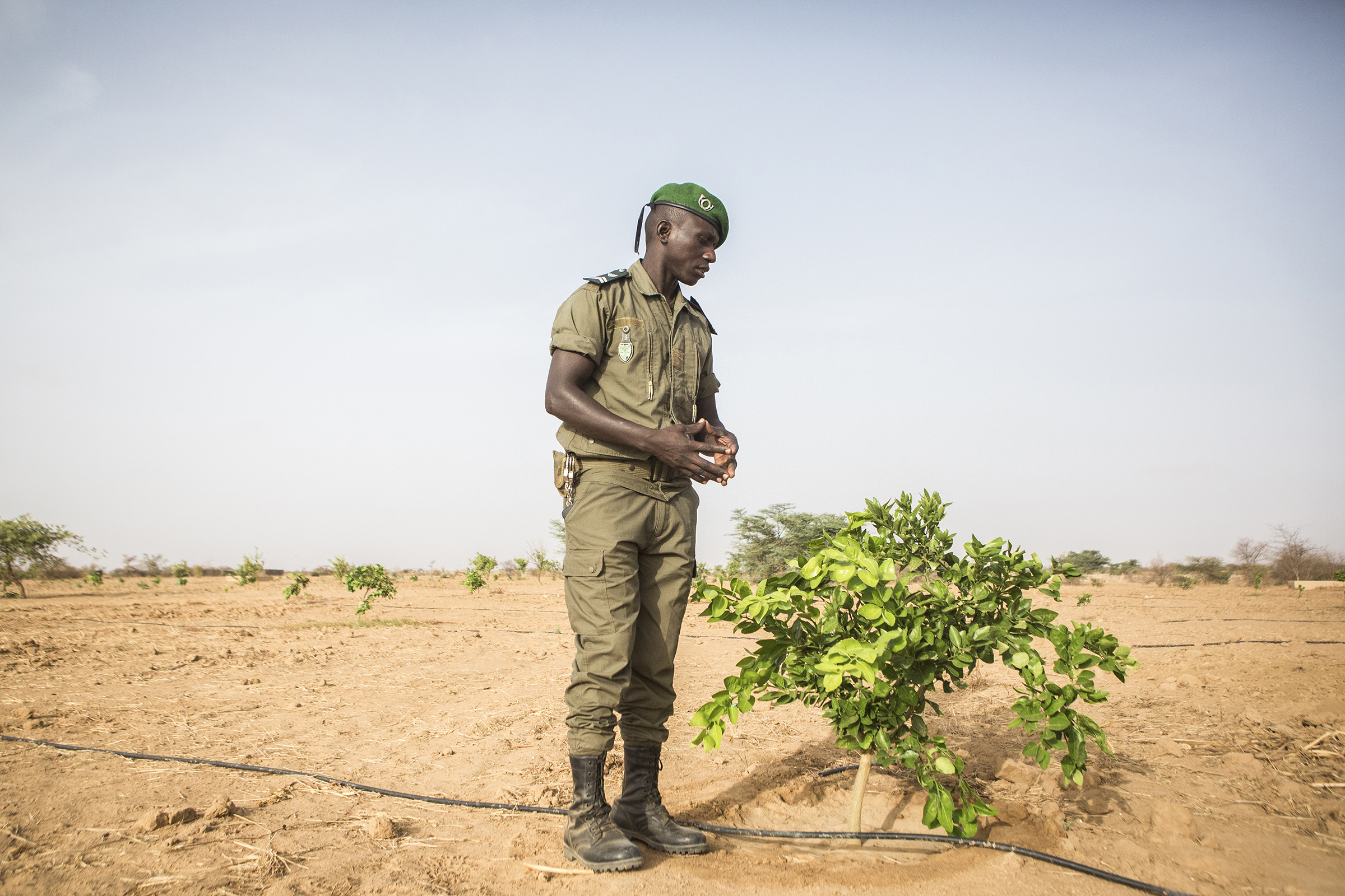 El Haji Gouebiaby, Base Chief for the Great Green Wall, stands beside a growing lemon tree in Mbar Toubab.