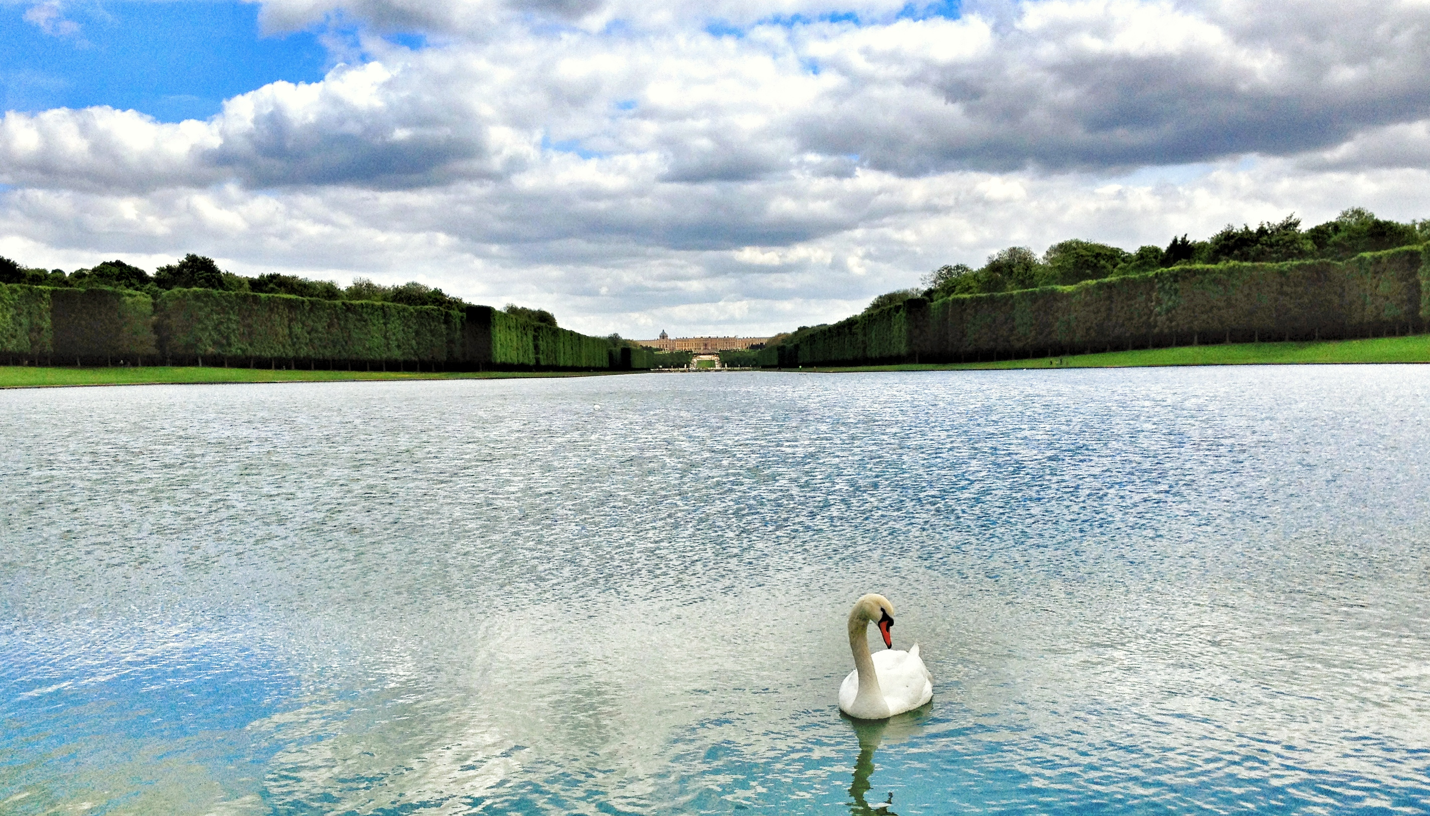 A swan posing in the lake in front of Chateau de Versailles.