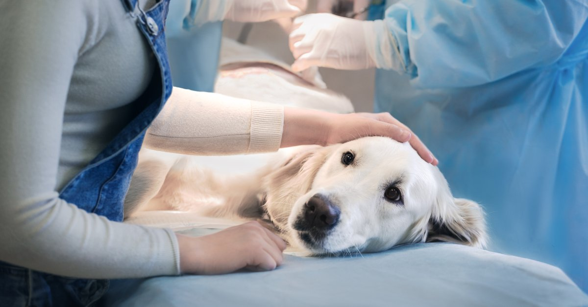Here S Why Suicide Among Veterinarians Is A Growing Problem Time
