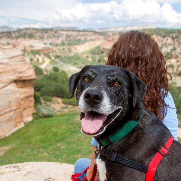 best-friends-animal-sanctuary-kanab-utah