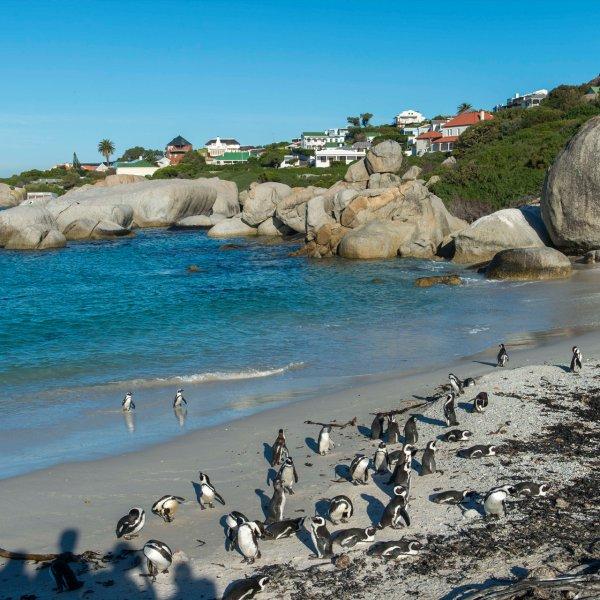 boulders-beach-simons-town-south-africa