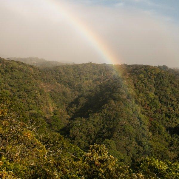 childrens-eternal-rainforest-monteverde-costa-rica